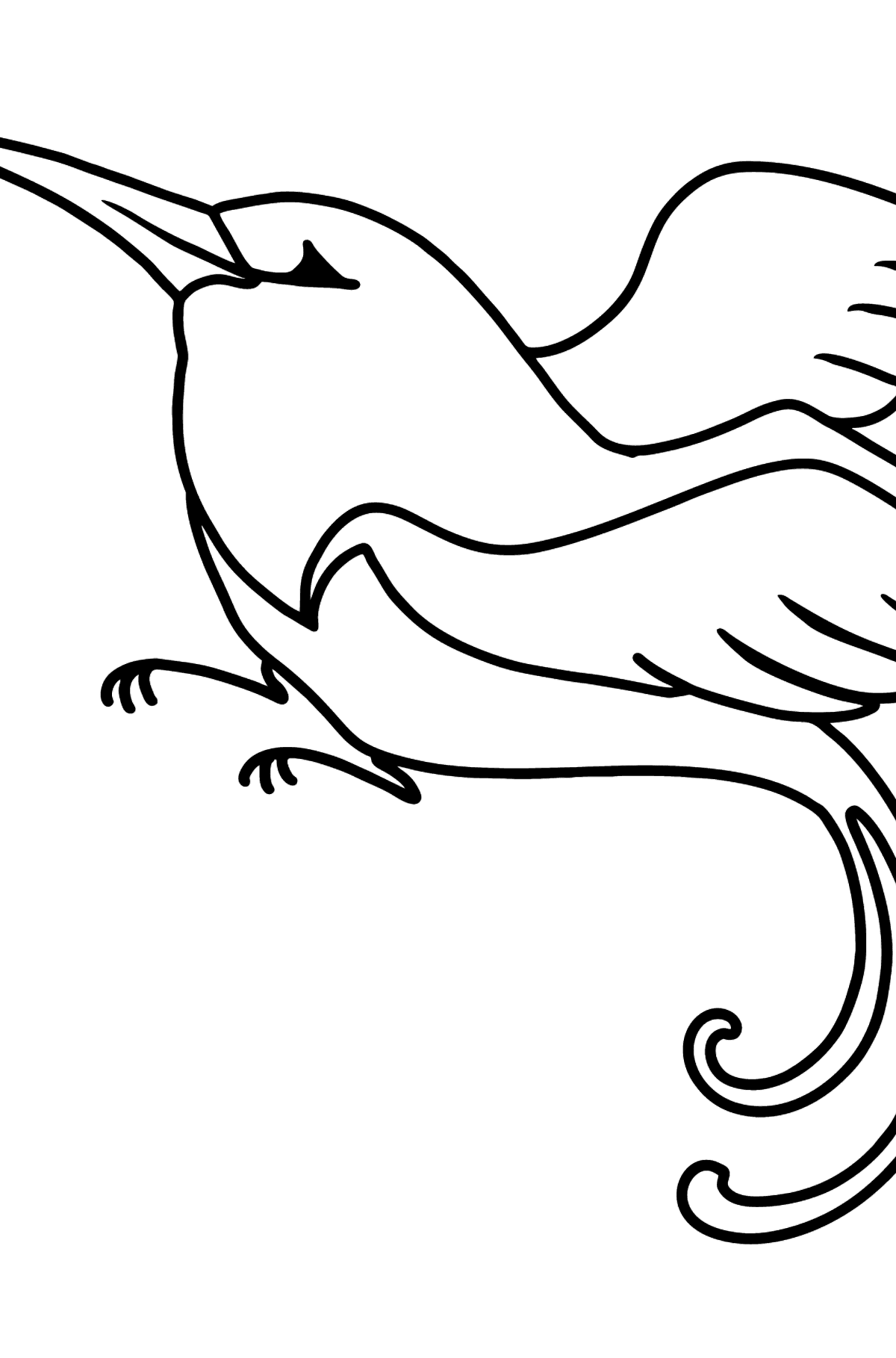 Hummingbird coloring page - Coloring Pages for Kids