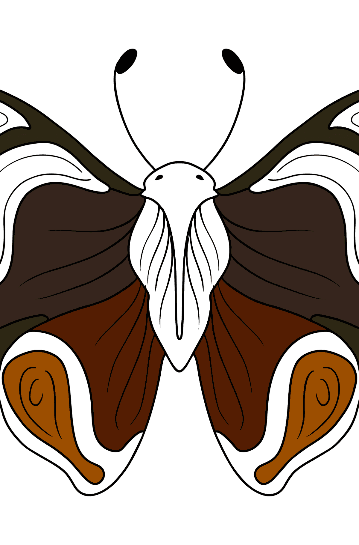 Admiral Butterfly coloring page - Coloring Pages for Kids
