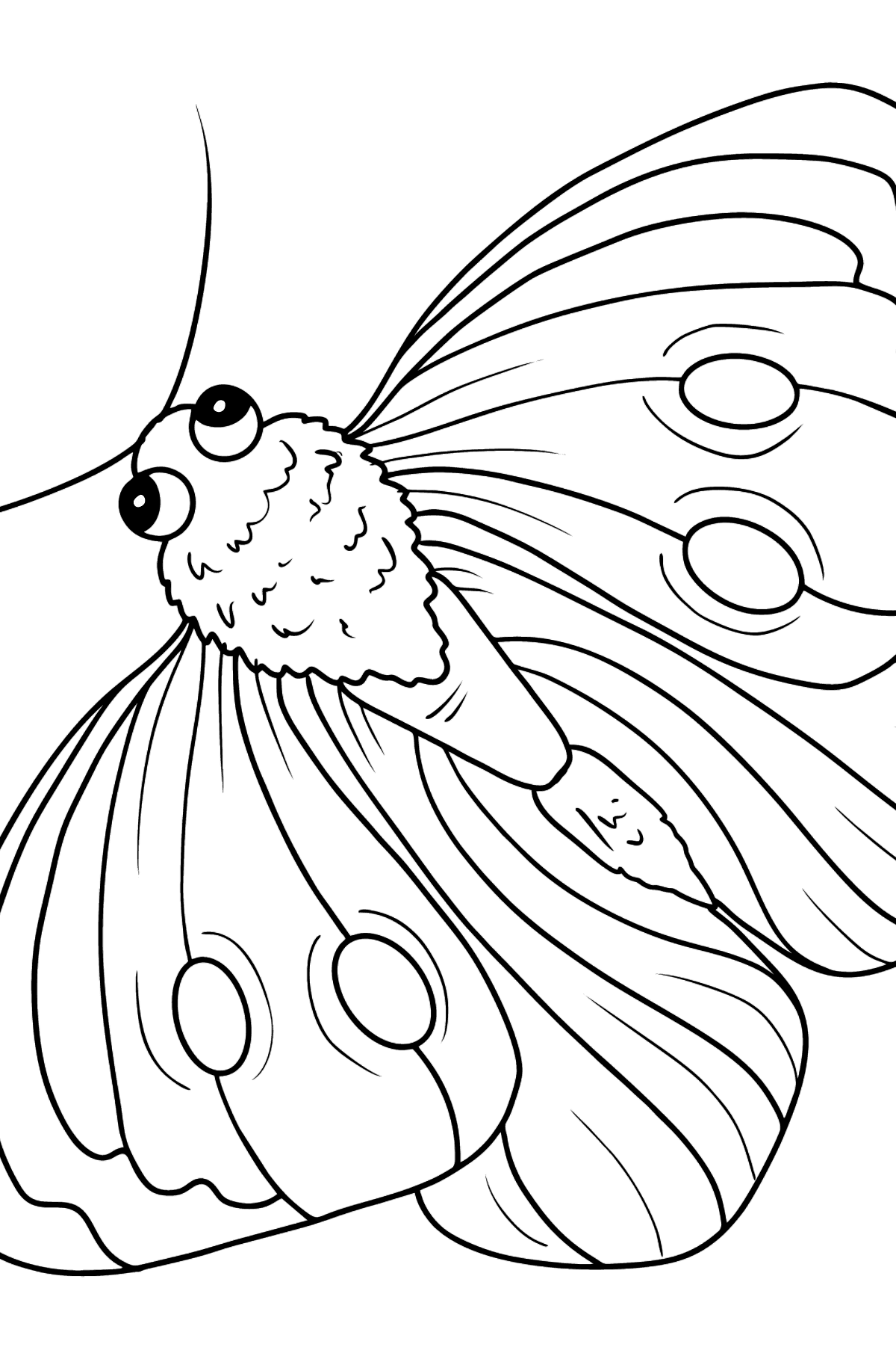 Pieris Butterfly coloring page - Coloring Pages for Kids