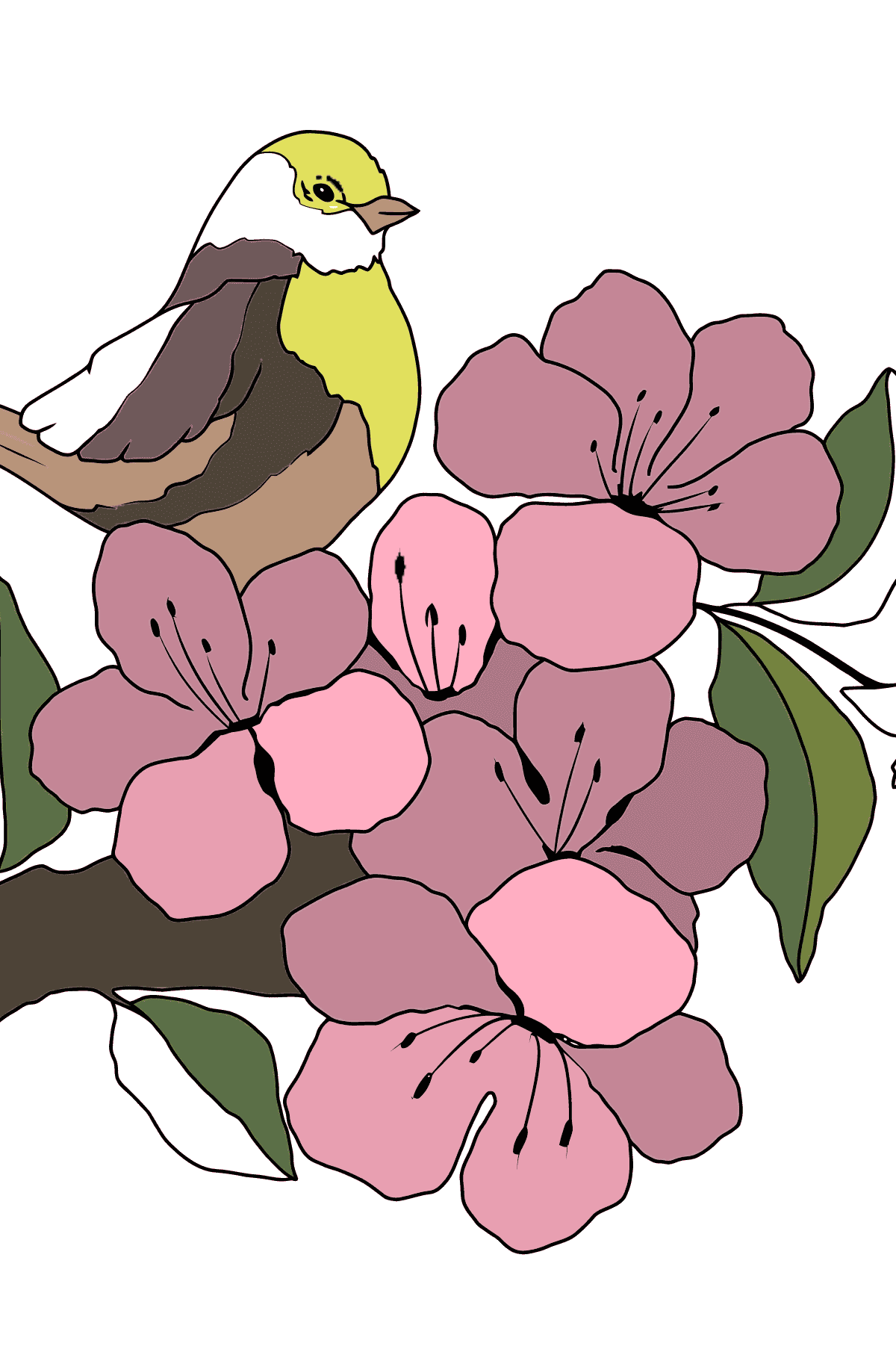 Summer Coloring Page - A Bird is Chirping on the Branch of an Apple Tree for Kids