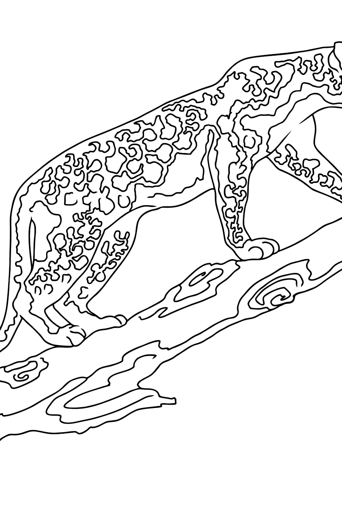 Coloring Page - A Leopard is Getting Ready for a Jump - Coloring Pages for Kids