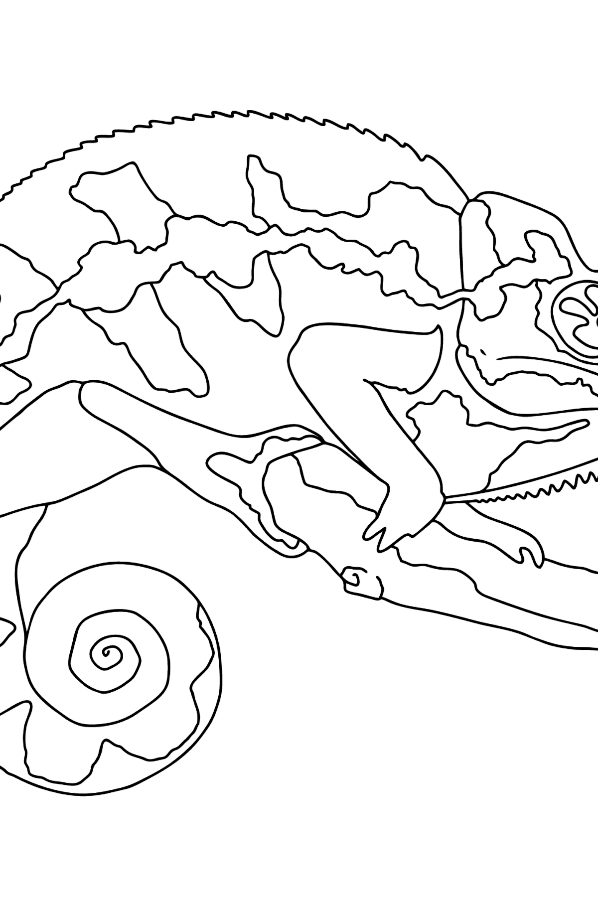 Coloring Page - A Multicolored Chameleon - Coloring Pages for Kids