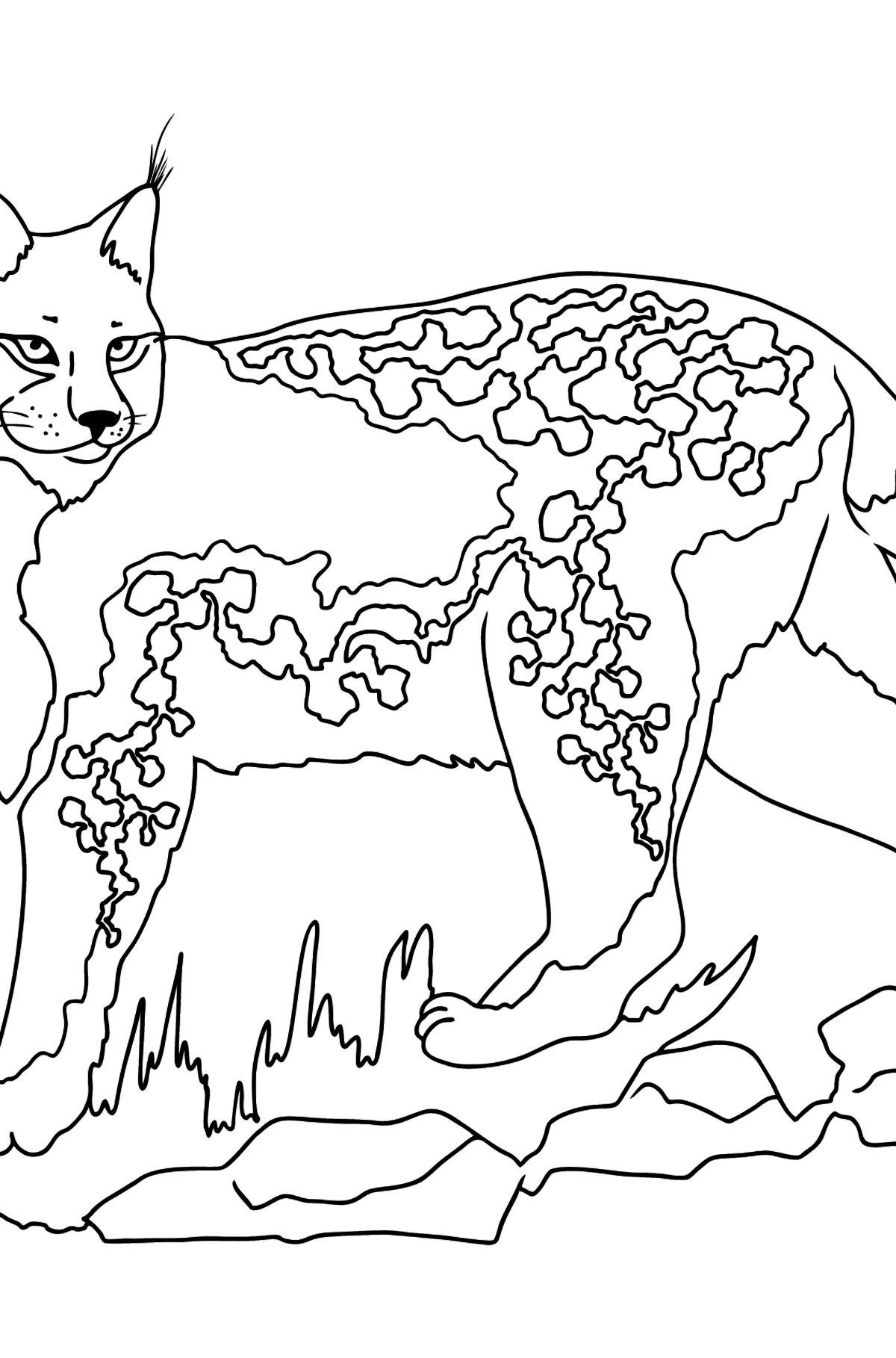 Coloring Page - A Strong Lynx - Coloring Pages for Kids