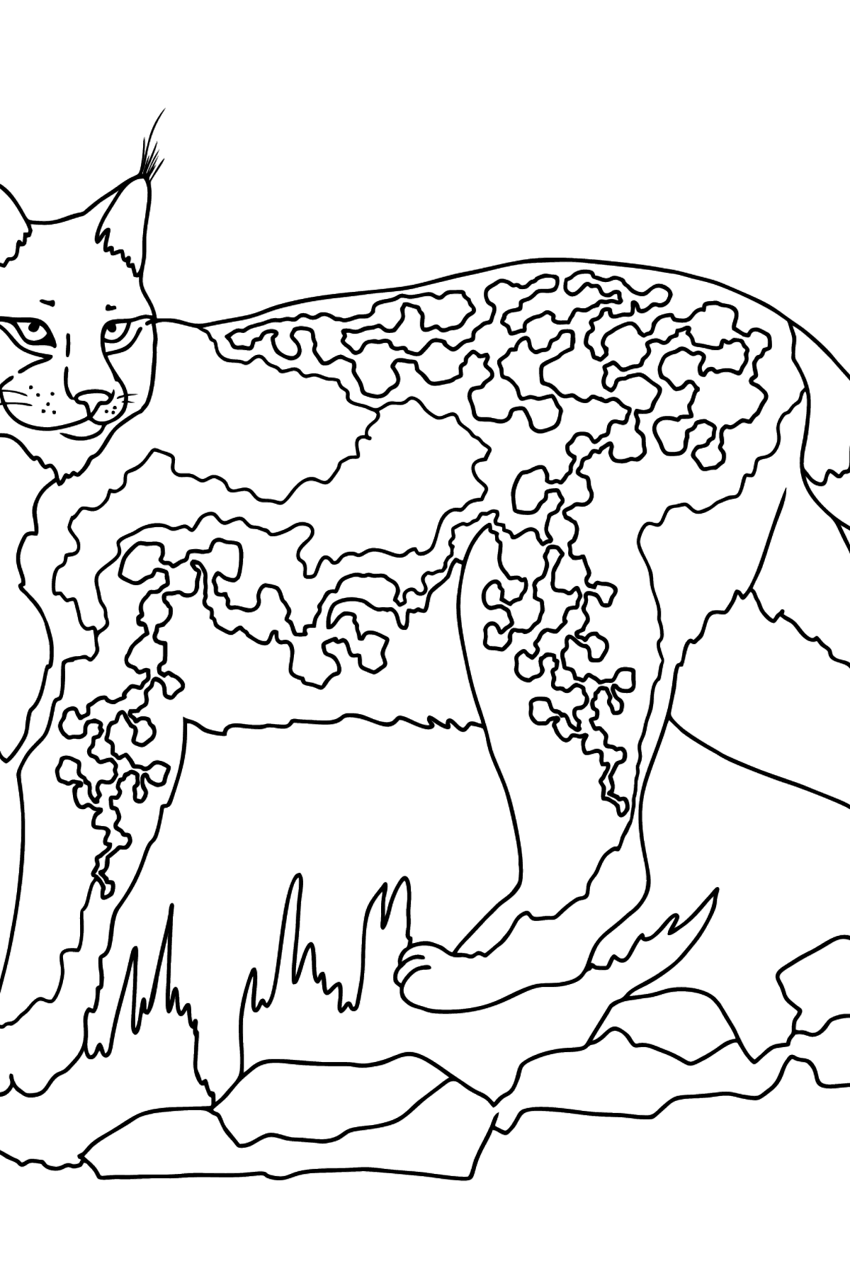 Coloring Page - A Wild Lynx - Coloring Pages for Kids