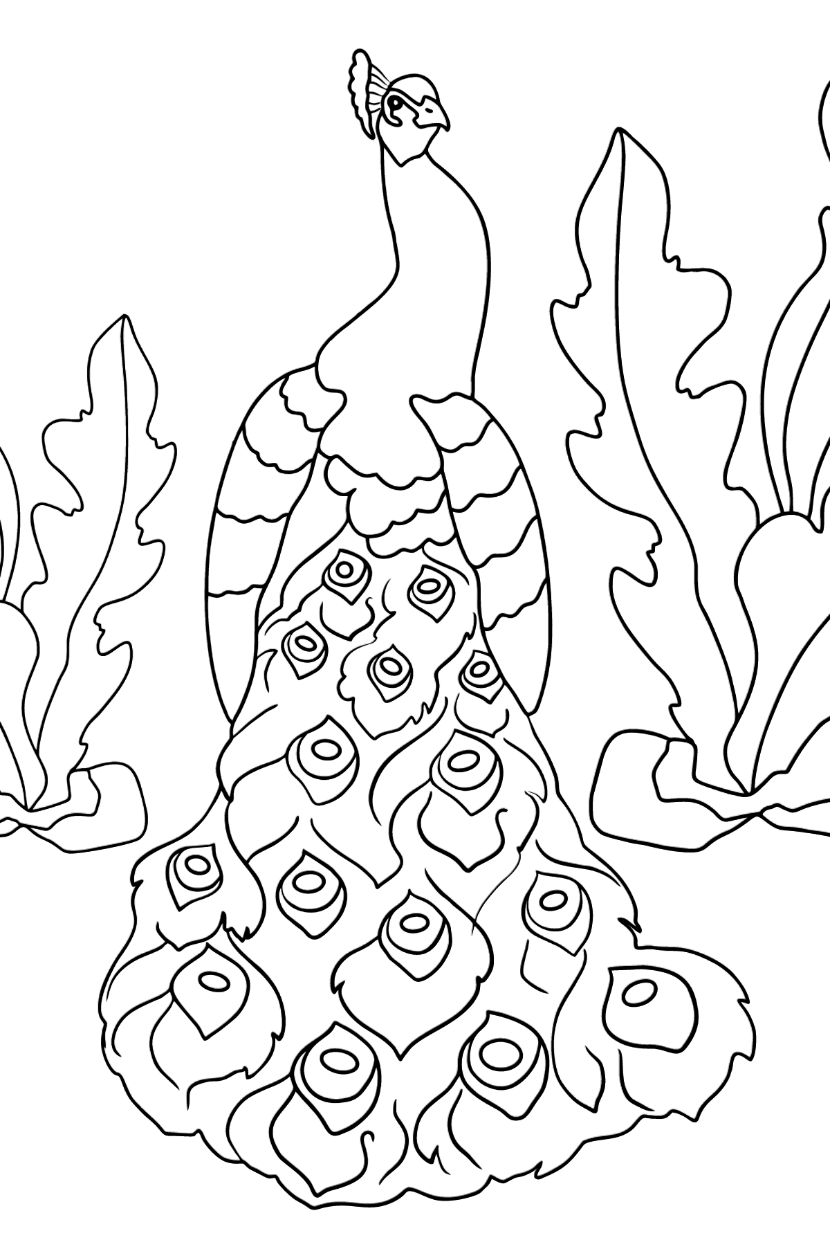 A Peacock Coloring Page - Coloring Pages for Kids