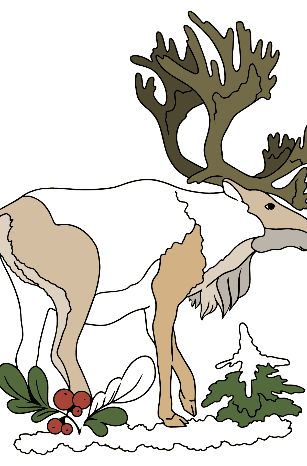 Coloring Page - a Deer with Gorgeous Antlers - Coloring Pages for Kids