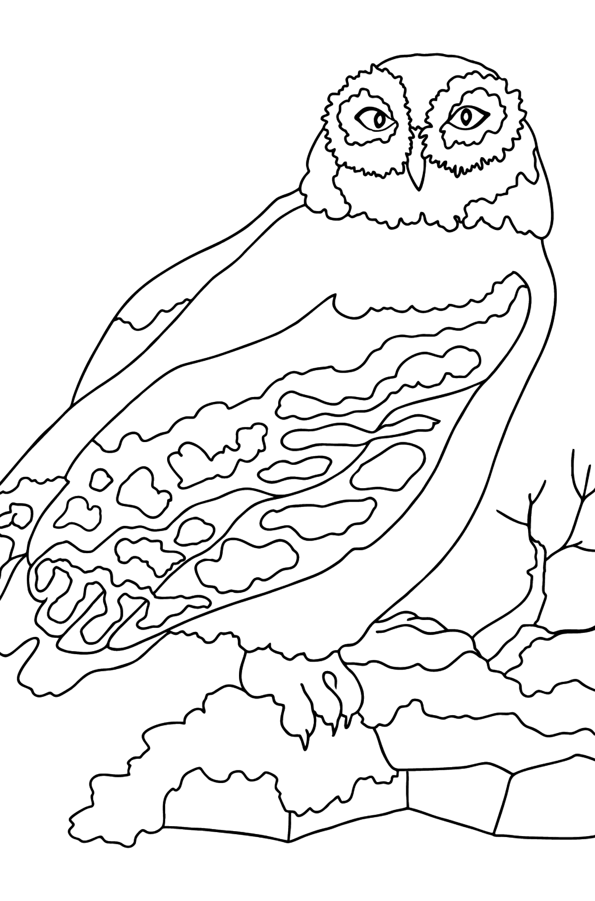 Coloring Page - A Snow Owl - Coloring Pages for Kids