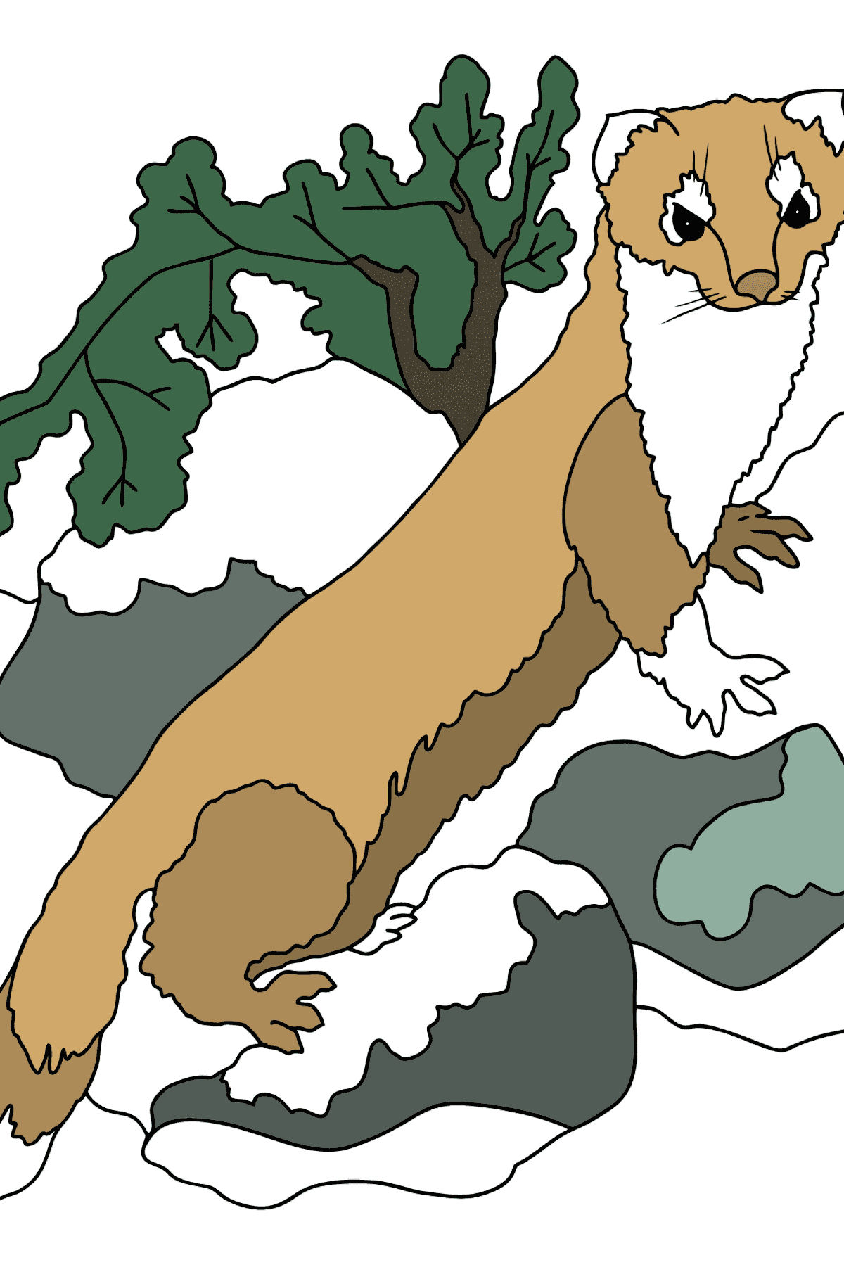Coloring Page - An Ermine - A Sly Hunter - Coloring Pages for Kids