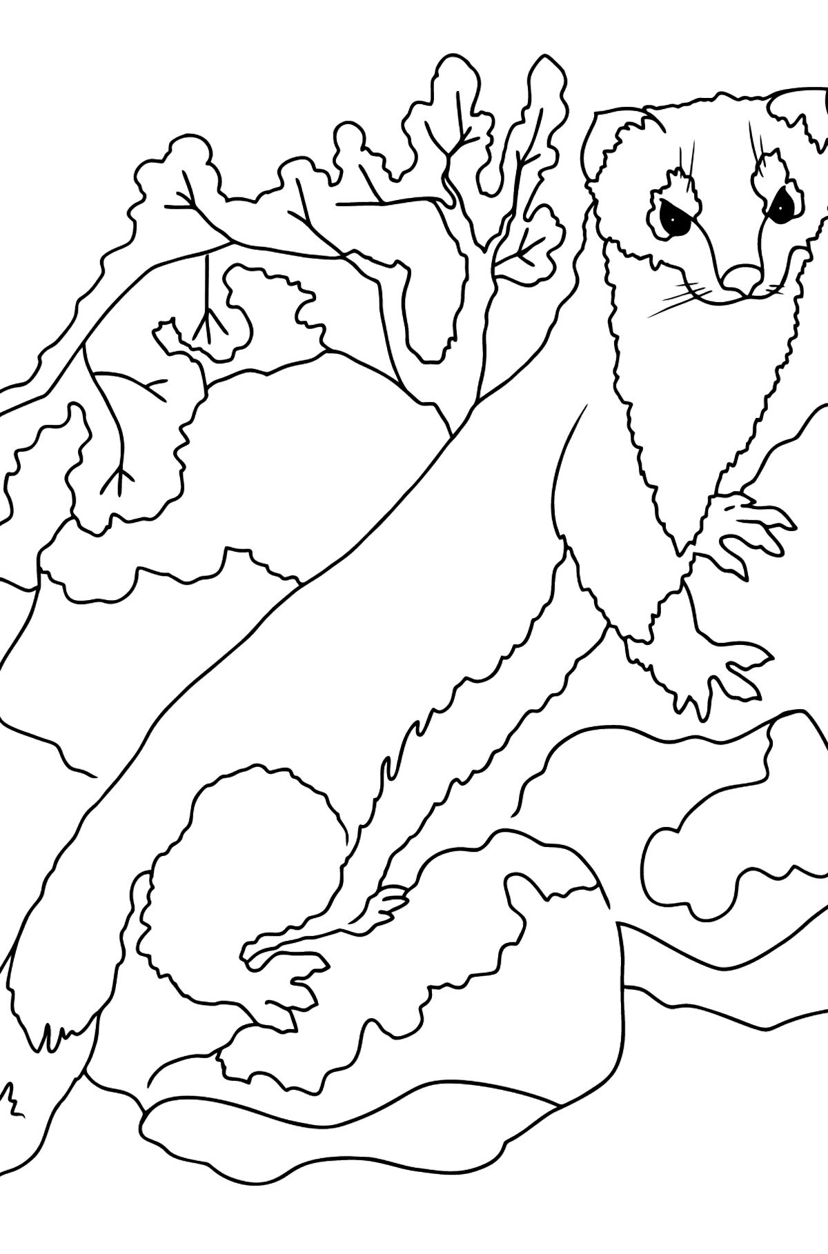 Coloring Page - An Ermine - A Small Fast Animal - Coloring Pages for Kids