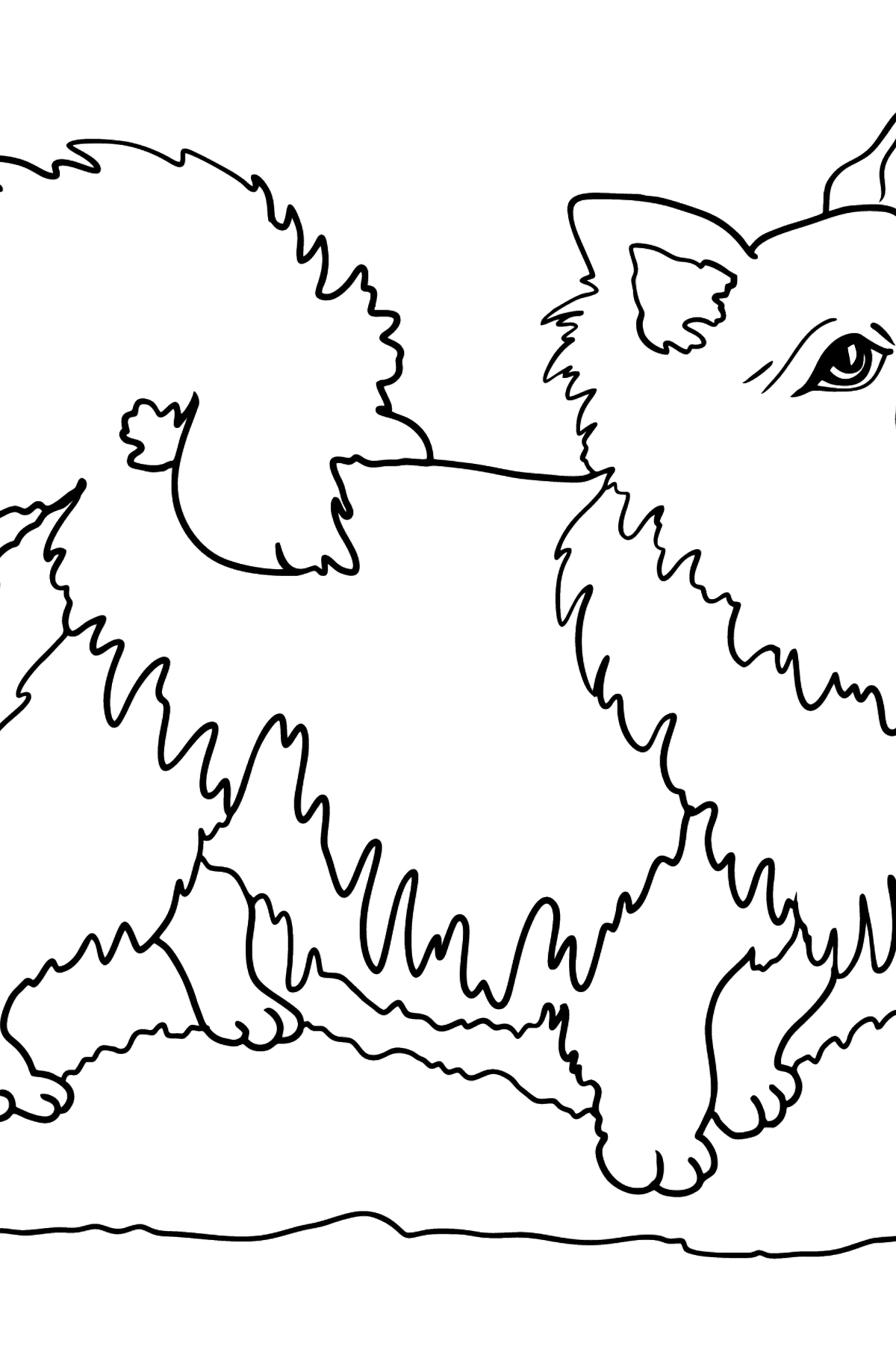 Chihuahua coloring page - Coloring Pages for Kids