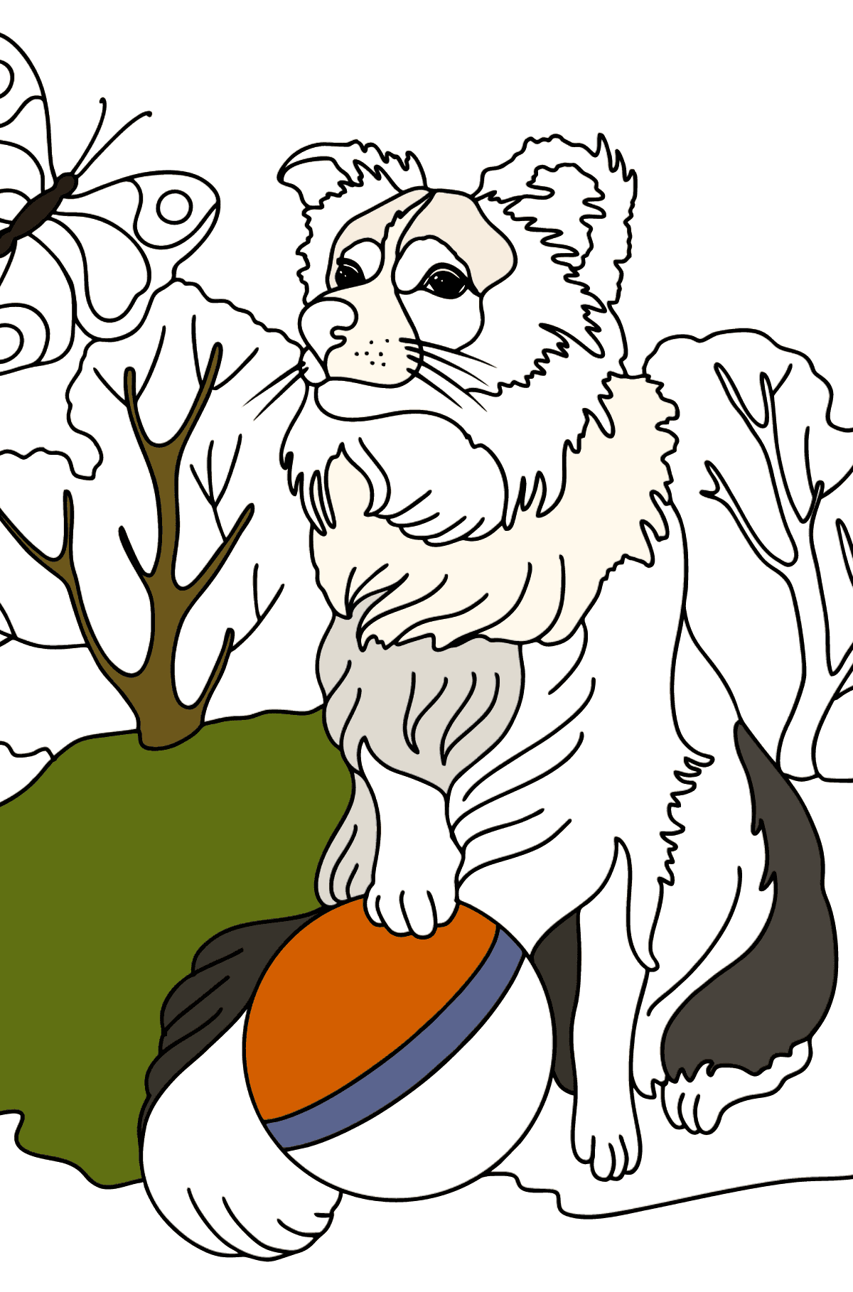 Collie coloring page - Coloring Pages for Kids