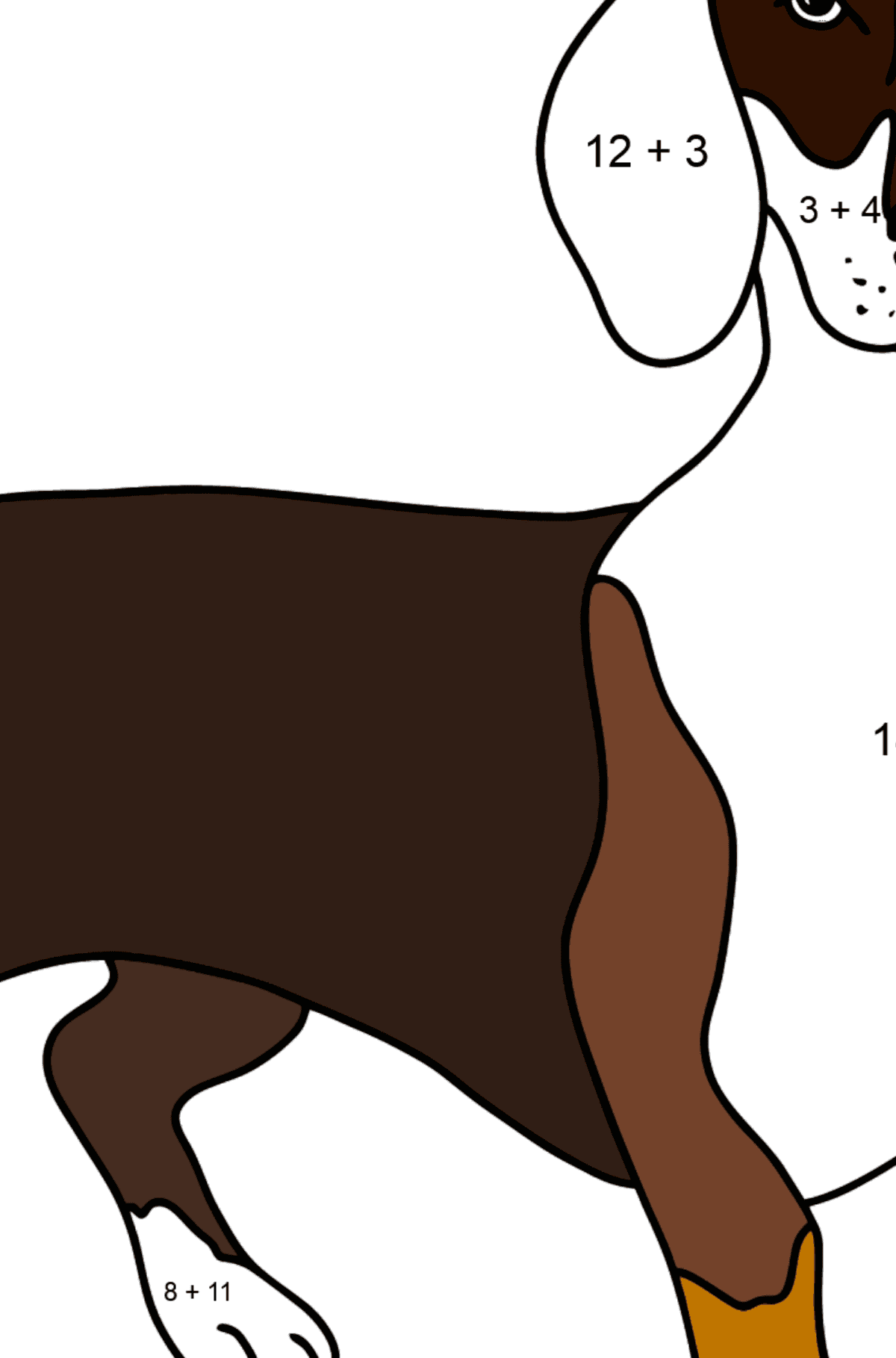 Dachshund coloring page - Math Coloring - Addition for Kids