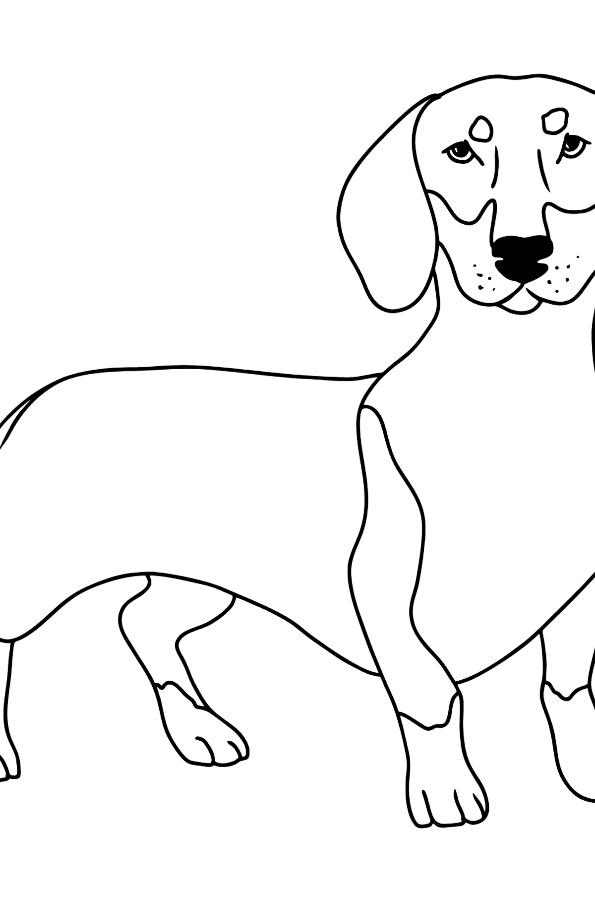 Dachshund coloring page - Coloring Pages for Kids