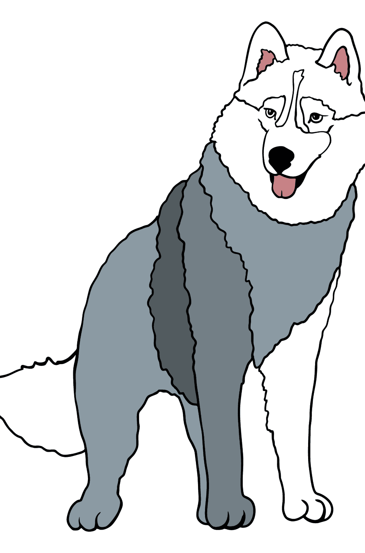 Husky coloring page for kids