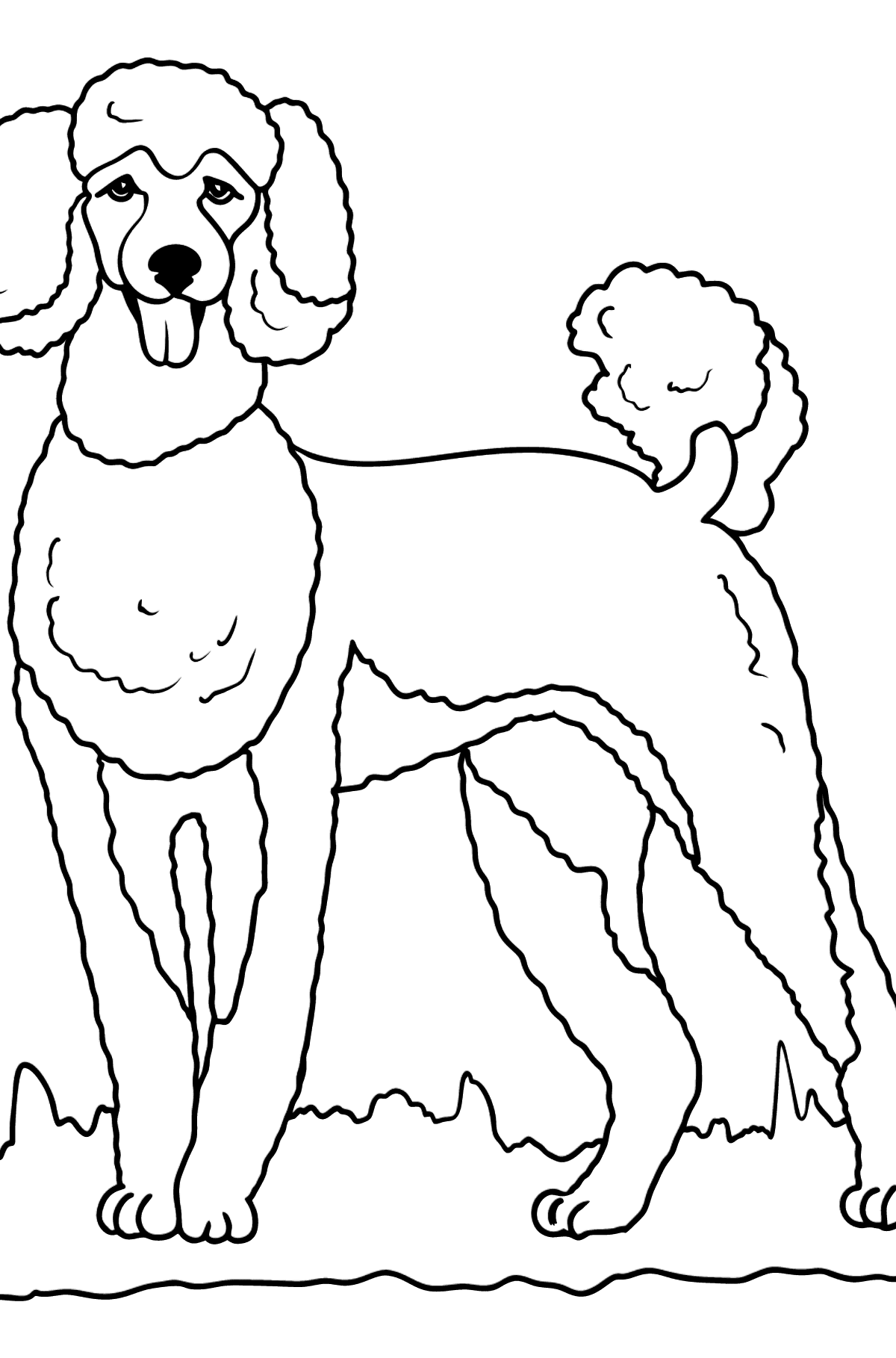 Poodle coloring page - Coloring Pages for Kids