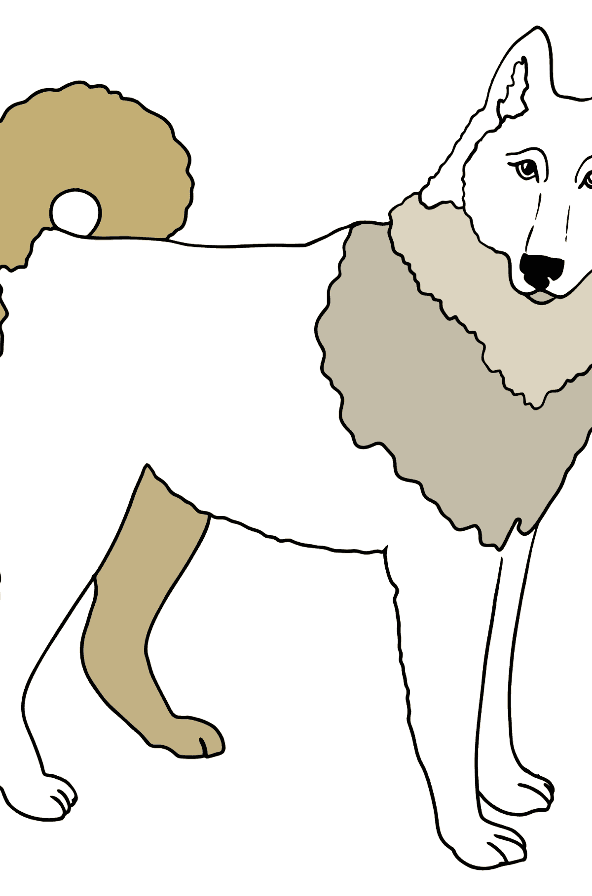 Siberian Husky coloring page - Coloring Pages for Kids