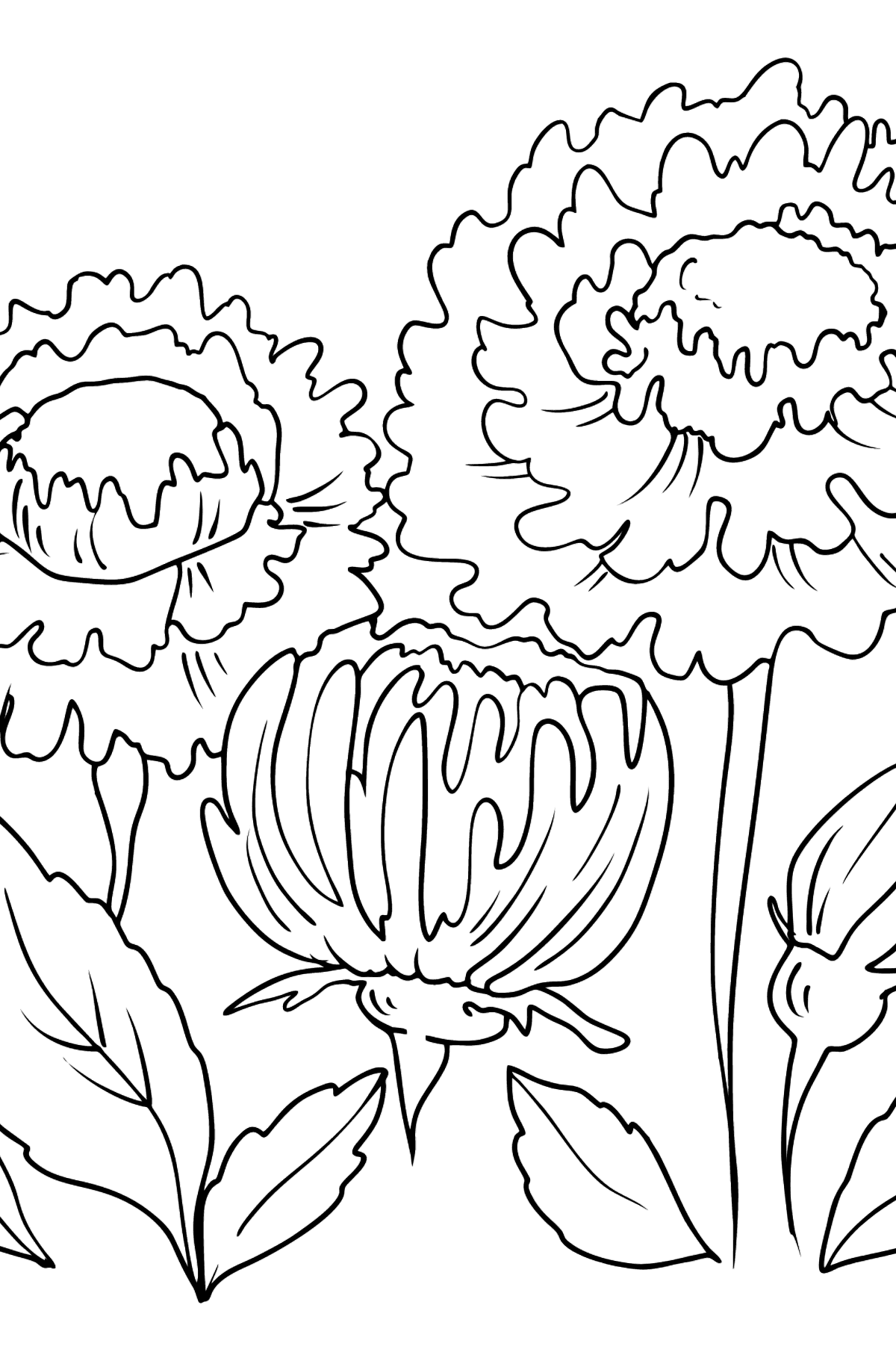 Flower Coloring Page - Asters - Coloring Pages for Kids