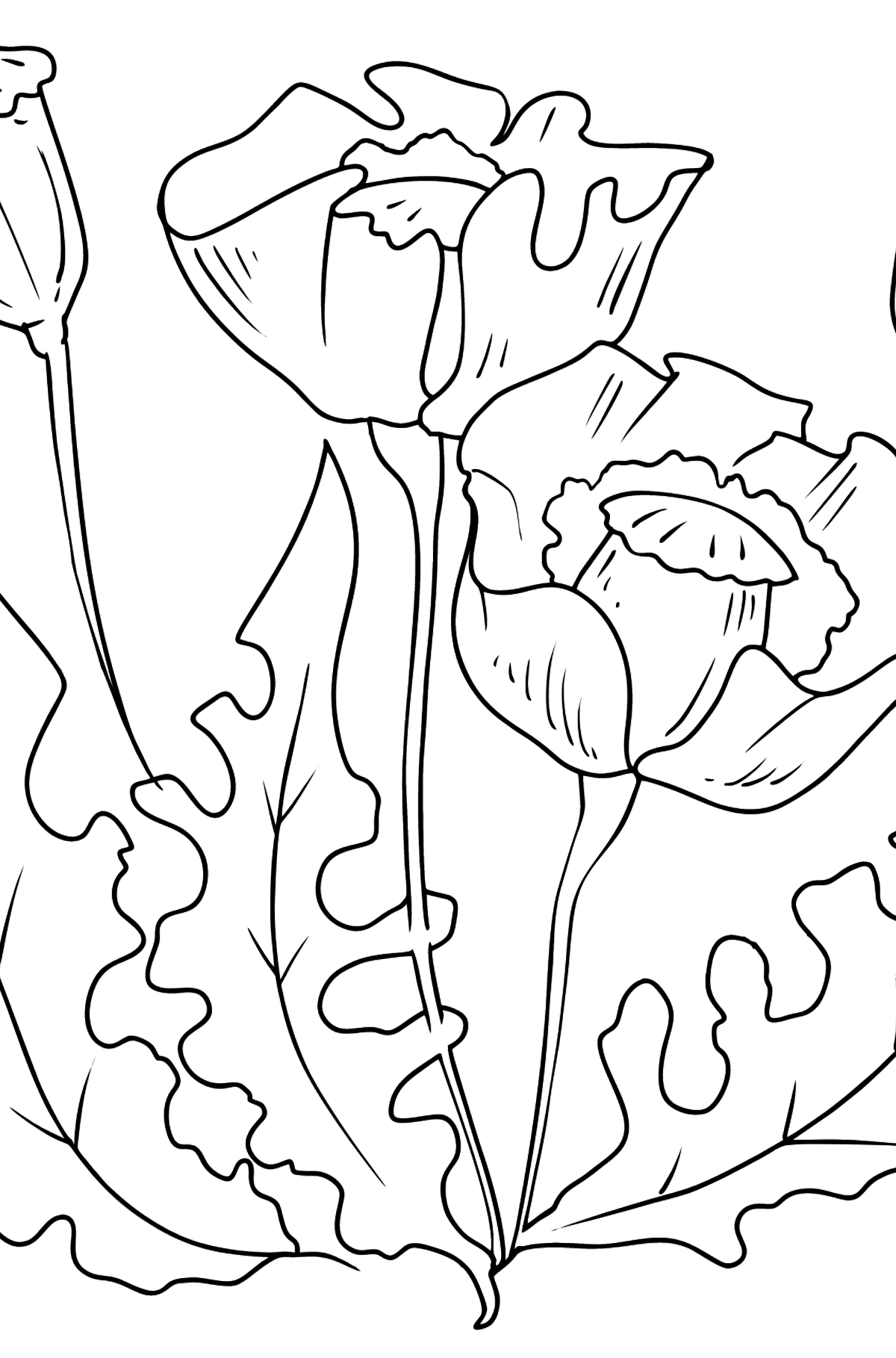 Flower Coloring Page - Beautiful Poppies - Coloring Pages for Kids
