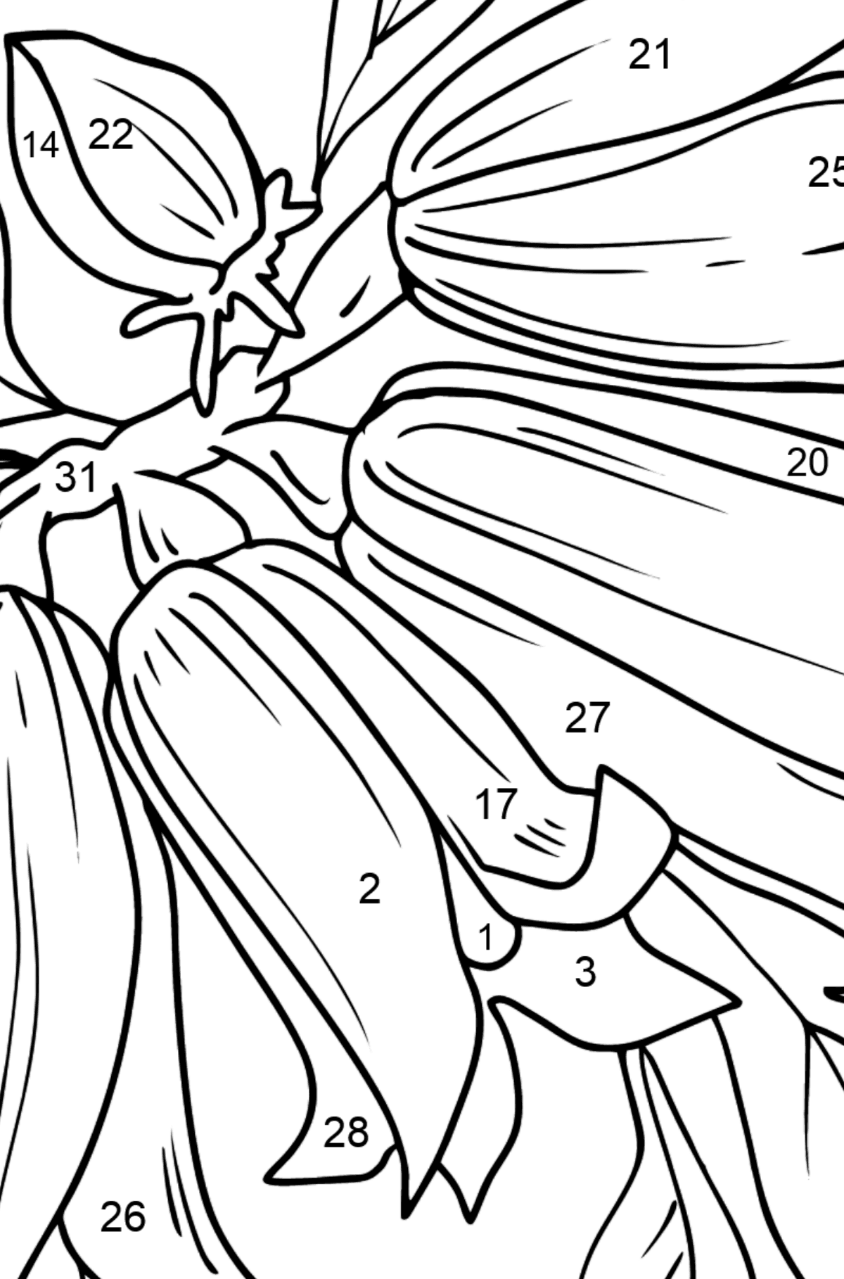 Flower Coloring Page - Bells - Coloring by Numbers for Kids