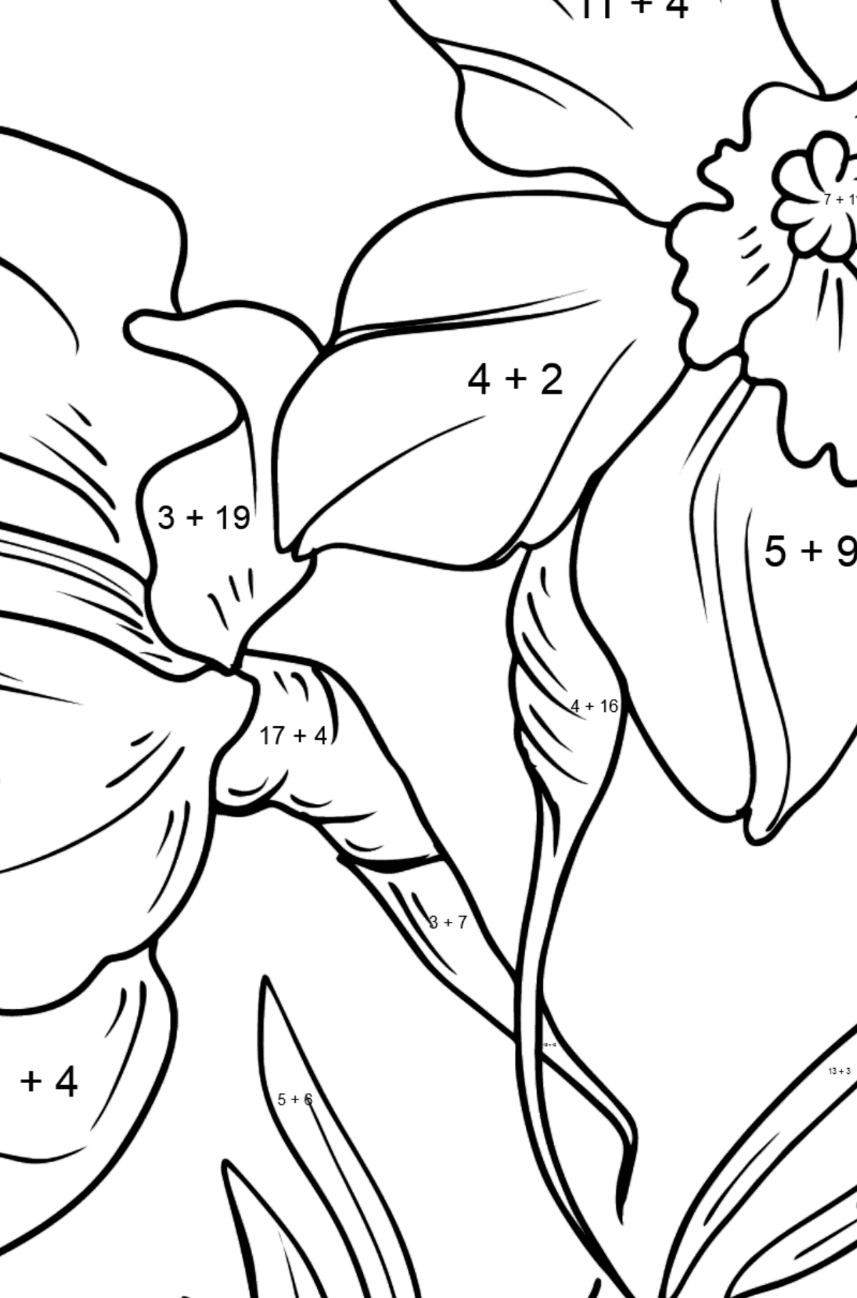 Flower Coloring Page - Daffodils - Math Coloring - Addition for Kids