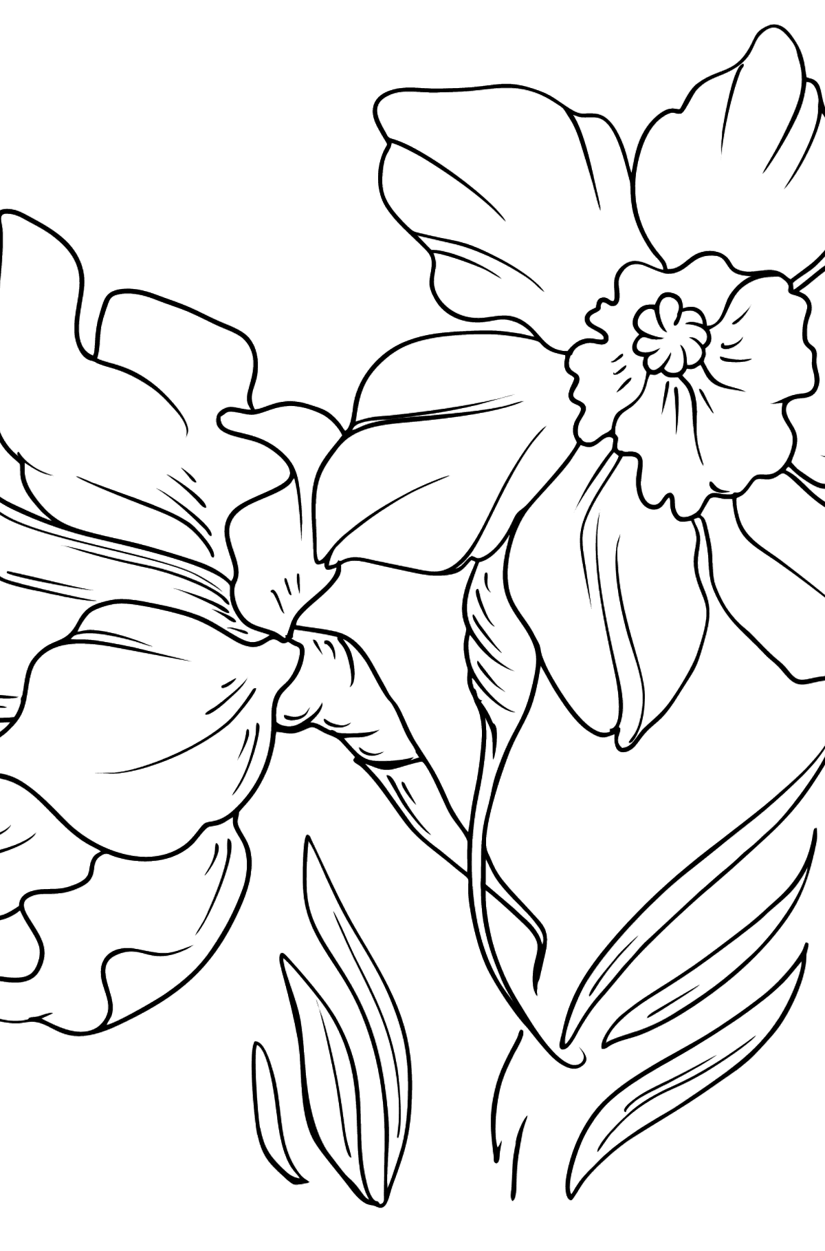 Flower Coloring Page - Daffodils - Coloring Pages for Kids