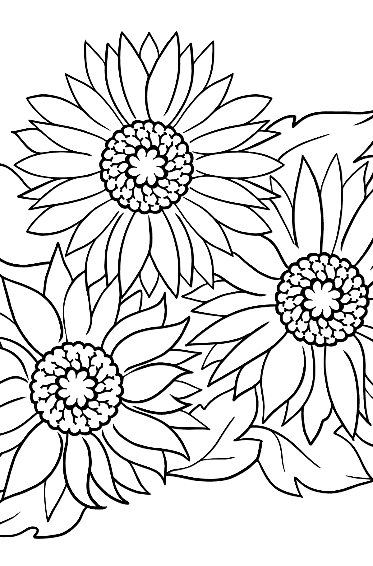 Flower Coloring Page - A Blue Gerbera - Coloring Pages for Kids