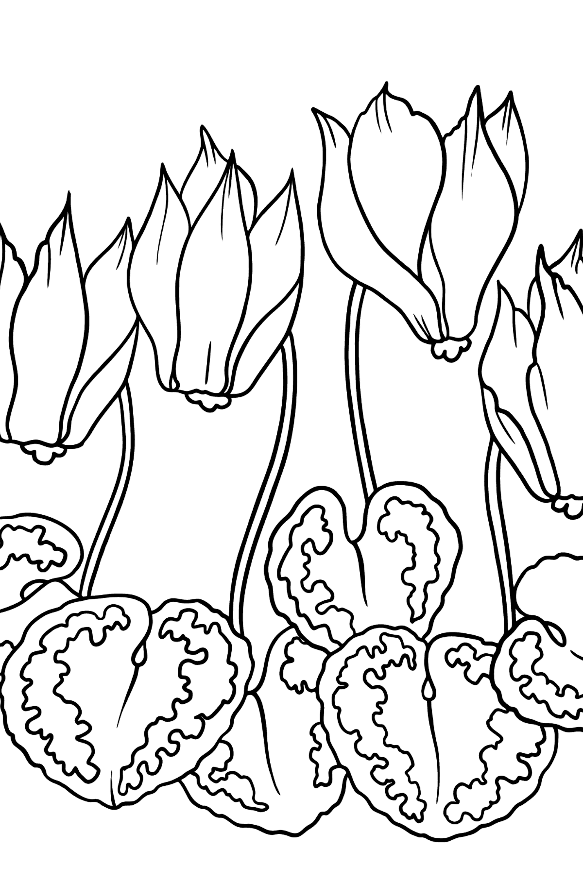 Flower Coloring Page - A Bright Pink Cyclamen - Coloring Pages for Kids