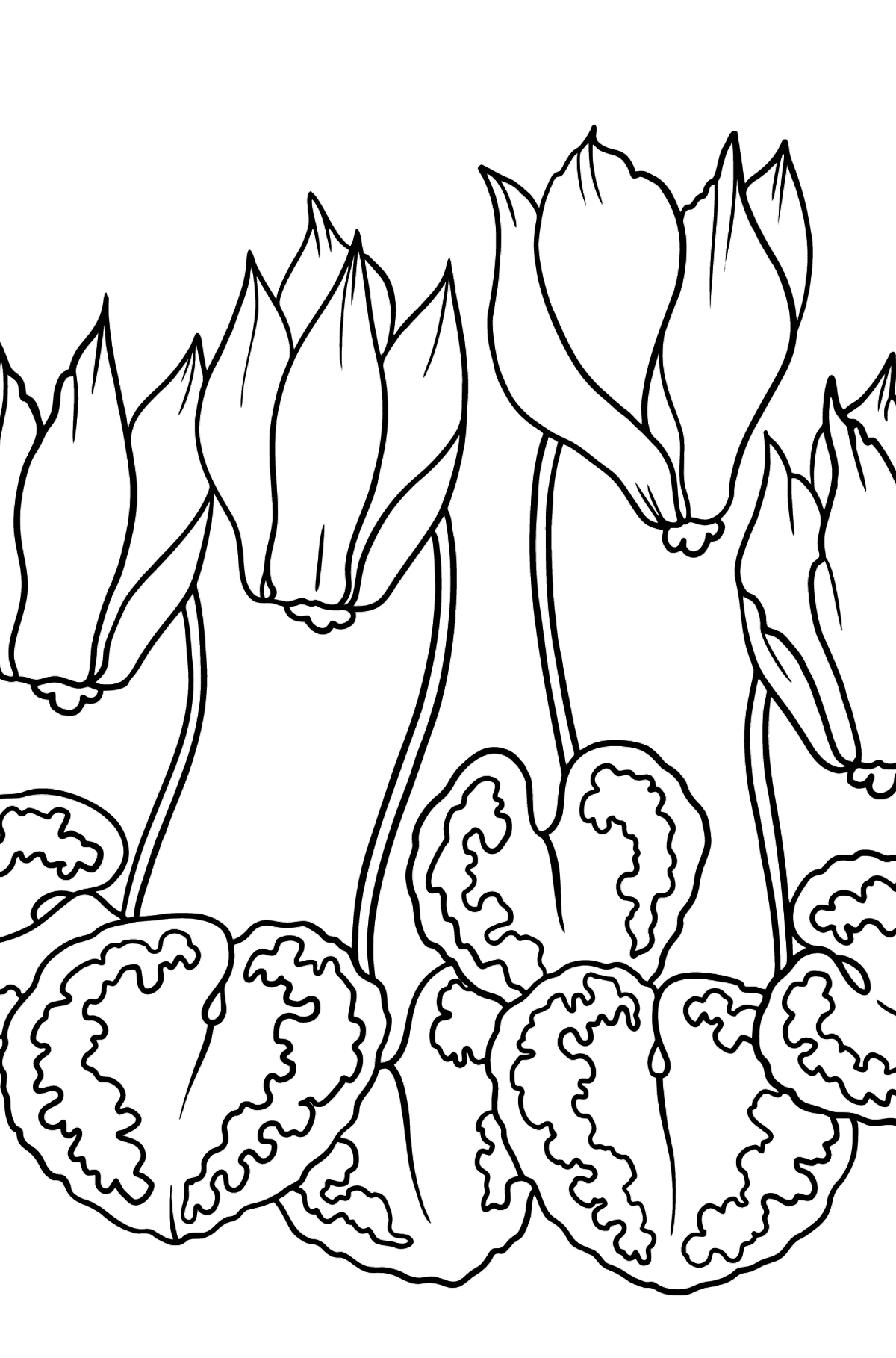 Flower Coloring Page - A Cyclamen with Red Petals - Coloring Pages for Kids