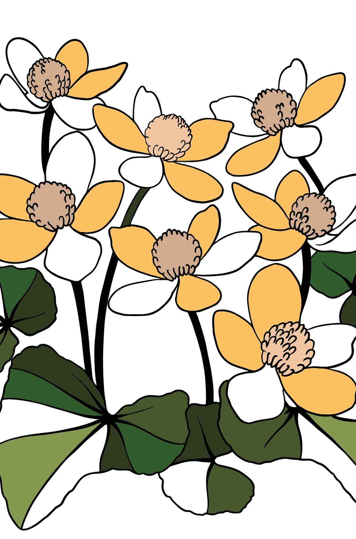Flower Coloring Page - A Marsh Marigold with Yellow Petals - Coloring Pages for Kids
