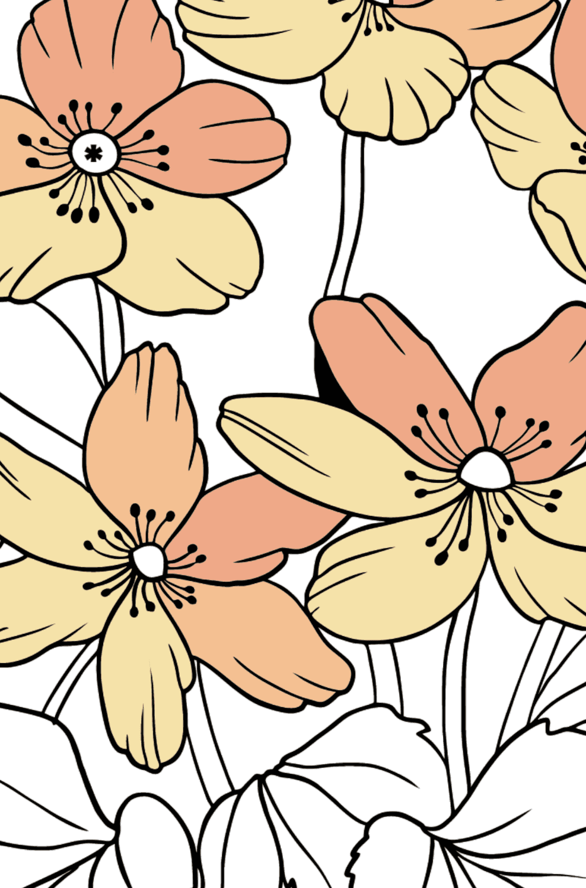 Flower Coloring Page - A Pastel Yellow Windflower - Coloring by Symbols for Kids