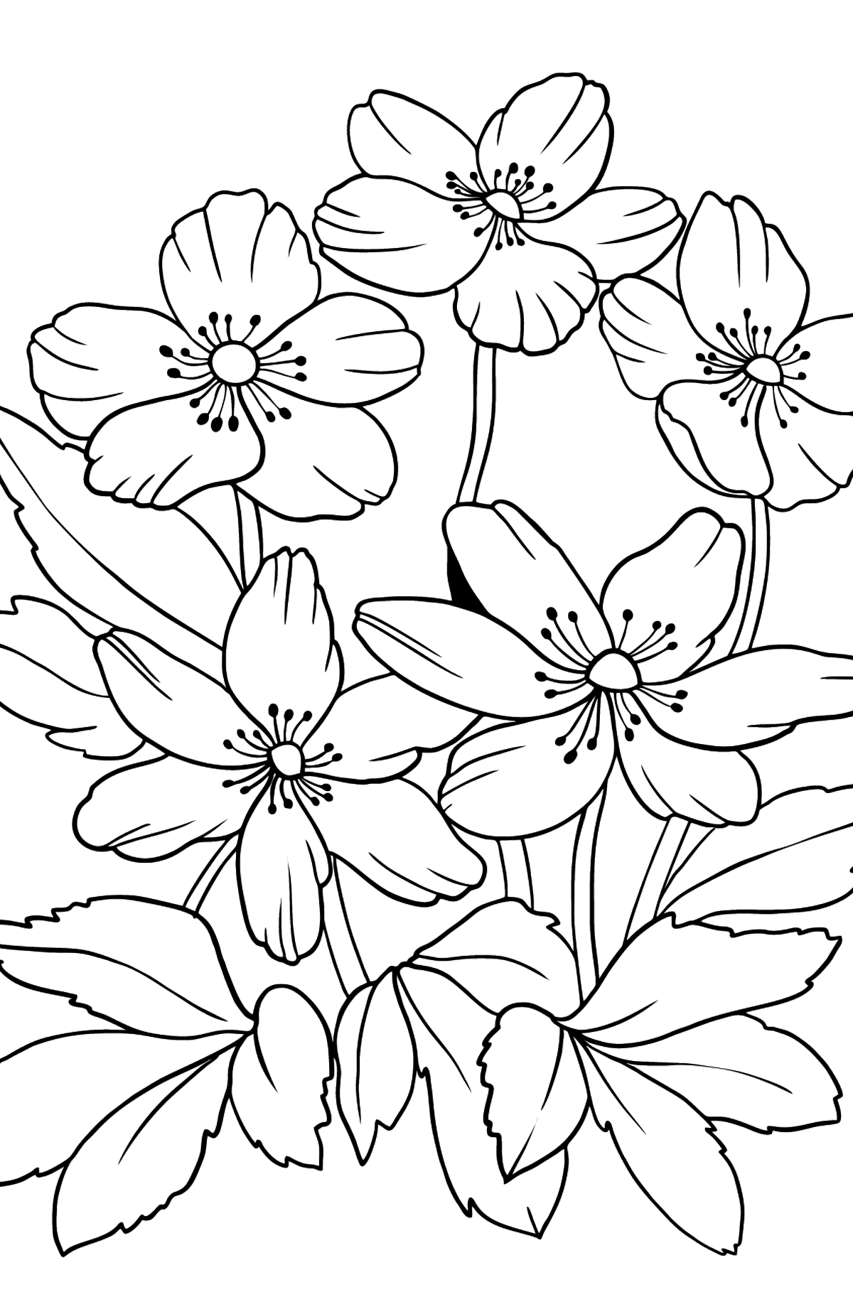 Flower Coloring Page - A Pastel Yellow Windflower - Coloring Pages for Kids