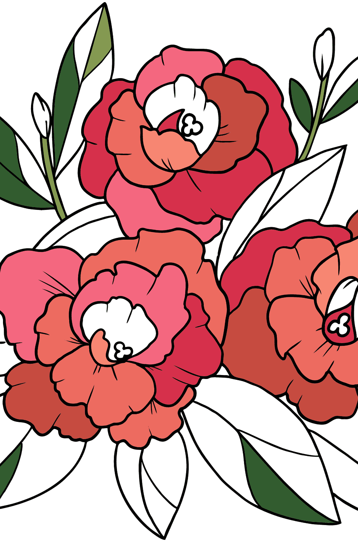 Flower Coloring Page - A Peony Blossom - Coloring Pages for Kids