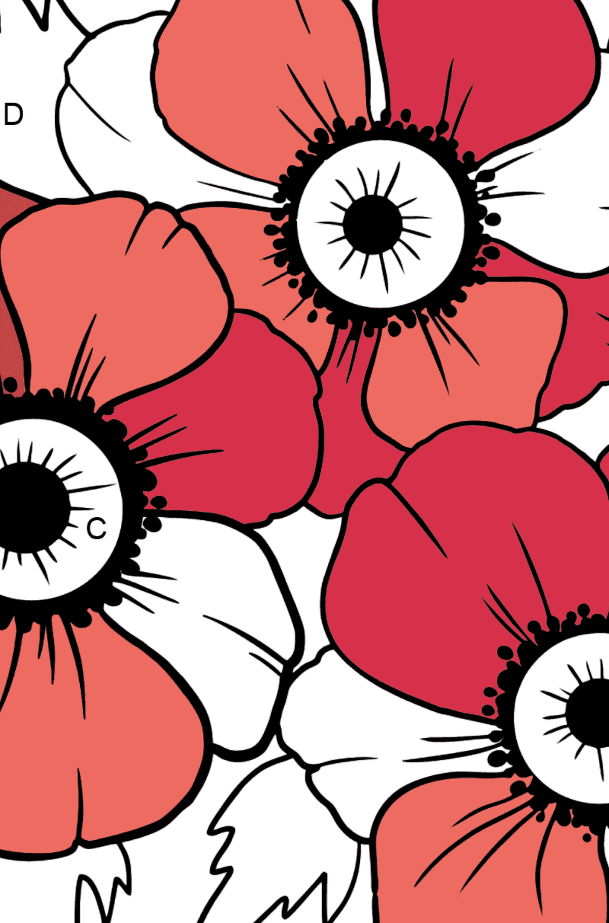 Coloring Page with big flower - A Red and Pink Anemone Coronaria - Coloring by Letters for Kids
