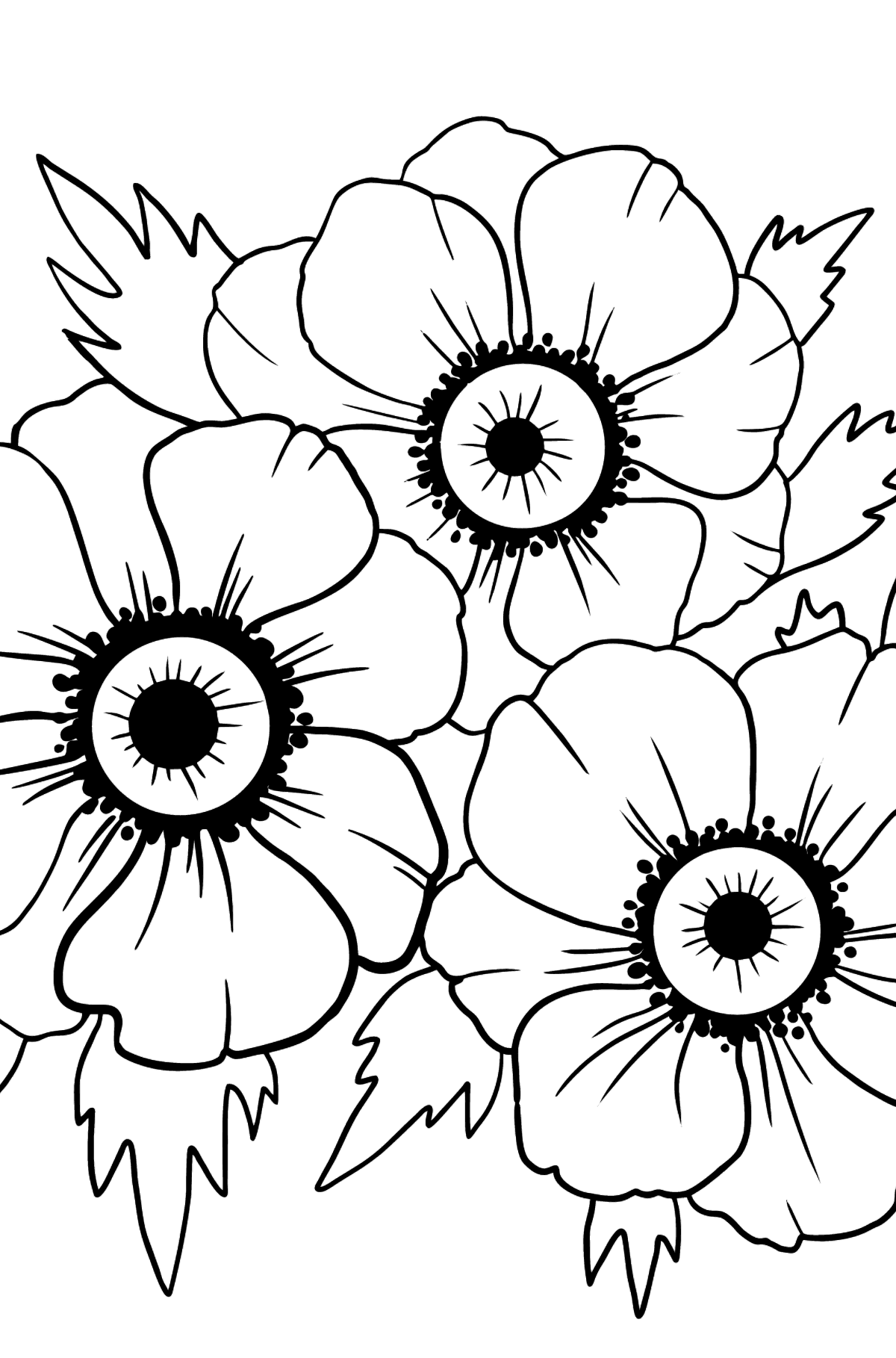 Coloring Page with big flower - A Red and Pink Anemone Coronaria - Coloring Pages for Kids