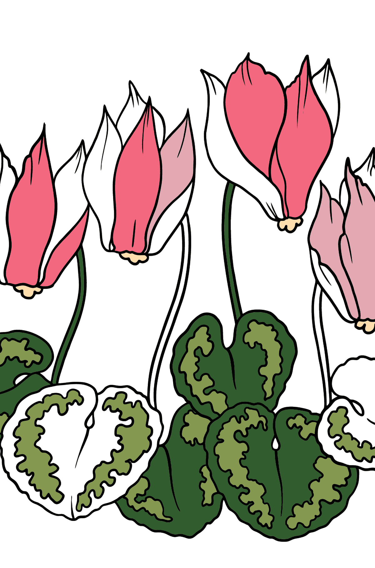 Flower Coloring Page - A Red and Pink Cyclamen - Coloring Pages for Kids