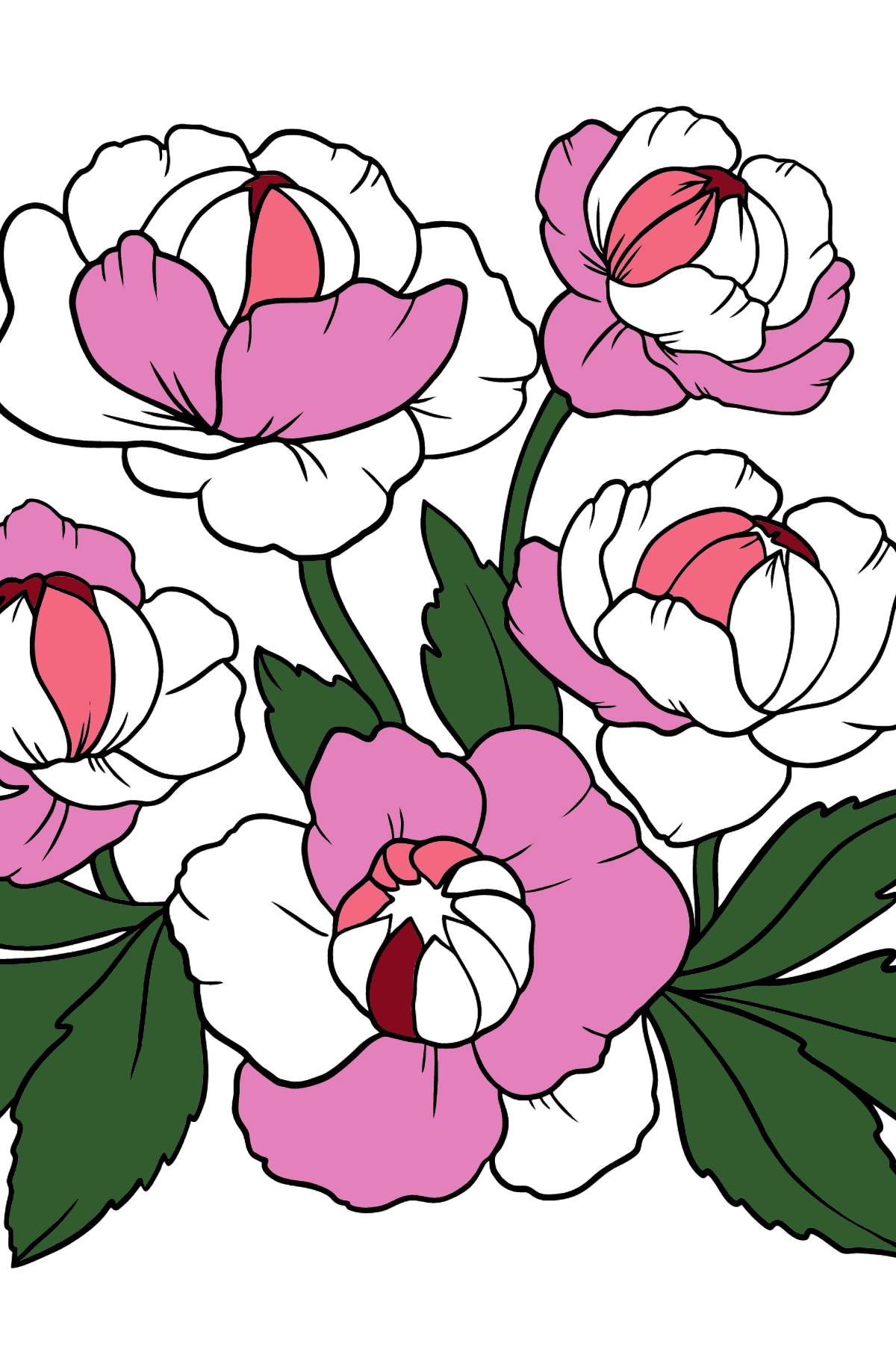 Beautiful Flower Coloring Page - A Red and Pink Globeflower - Coloring Pages for Kids