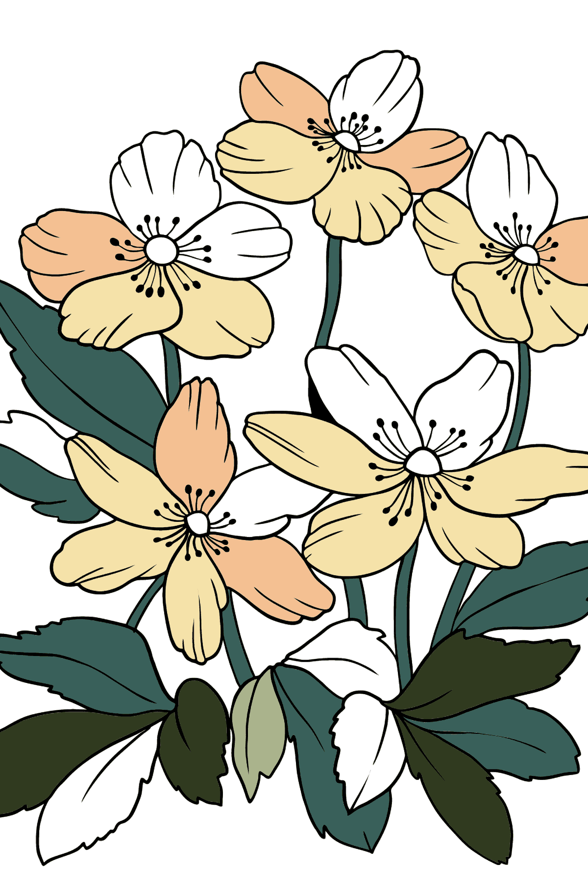 Flower Coloring Page - A Windflower with Yellow Petals - Coloring Pages for Kids