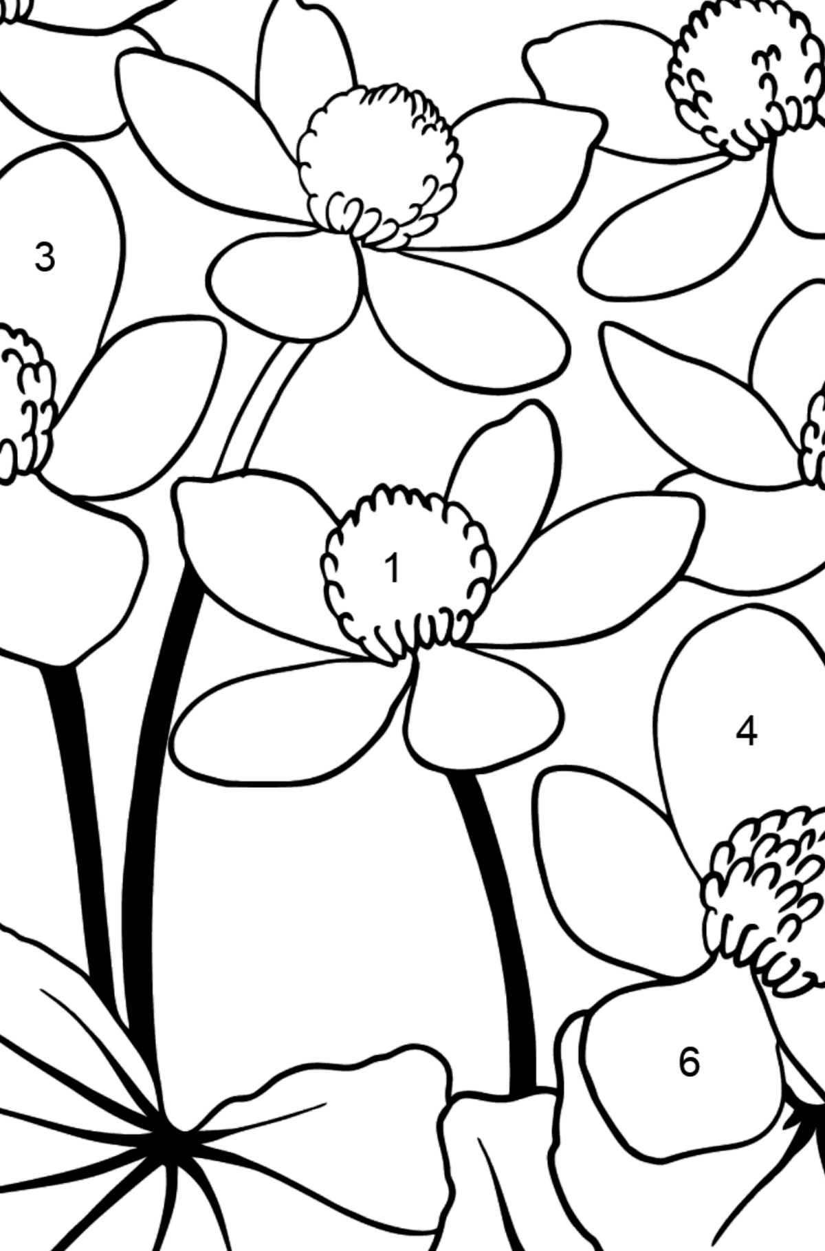 Flower Coloring Page - A Yellow and Red Marsh Marigold - Coloring by Numbers for Kids