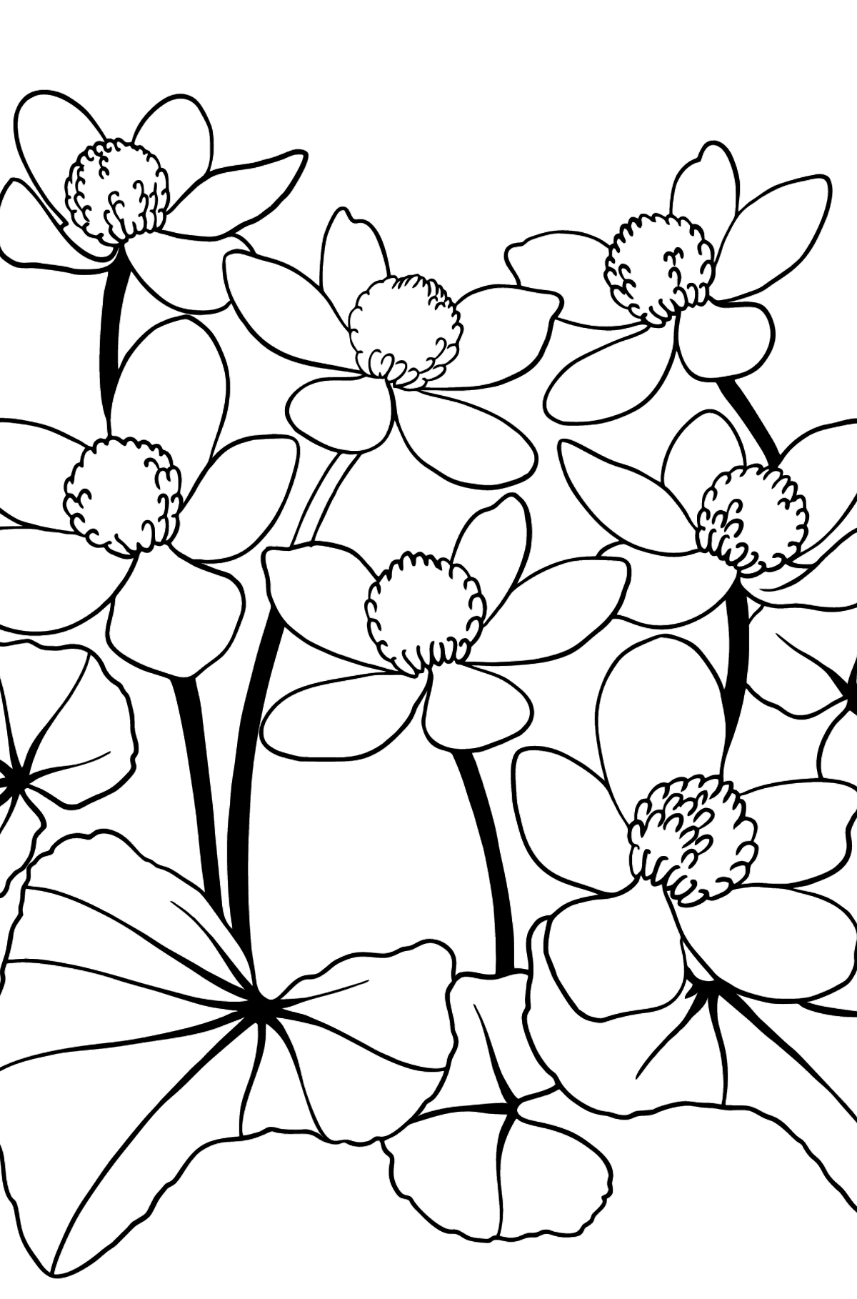 Flower Coloring Page - A Yellow and Red Marsh Marigold - Coloring Pages for Kids