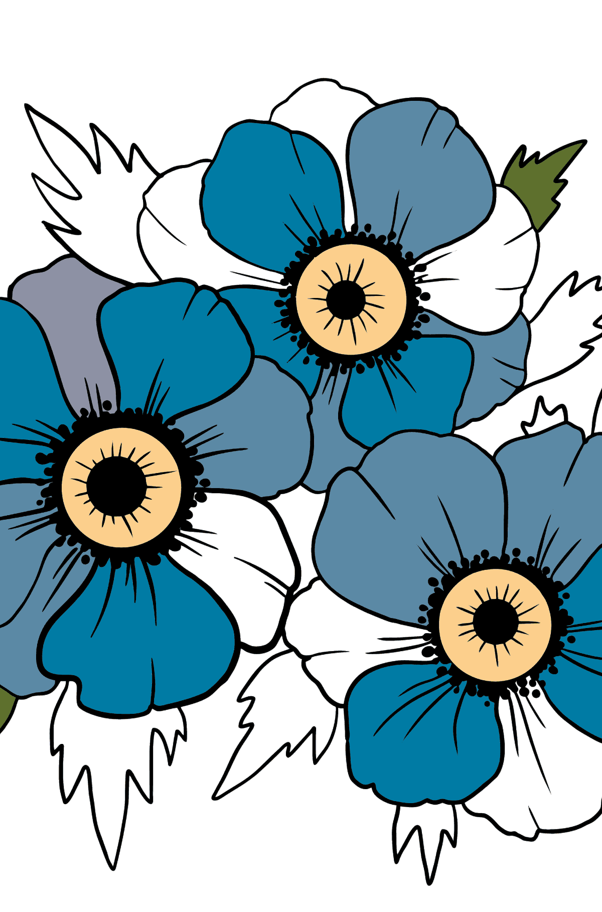 Flower Coloring Page - Anemone Mr. Fokker - Coloring Pages for Kids