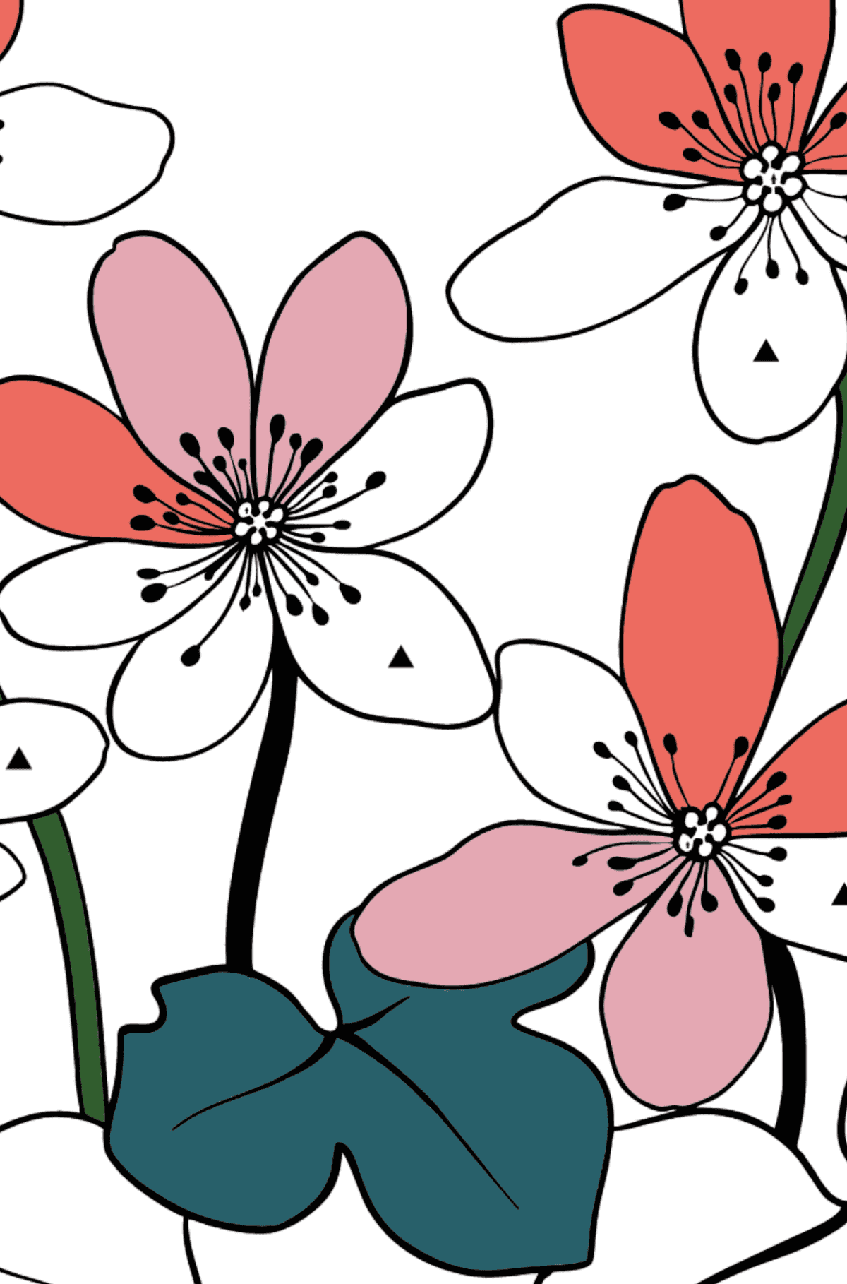 Flower Coloring Page - Hepatica - Coloring by Symbols and Geometric Shapes for Kids