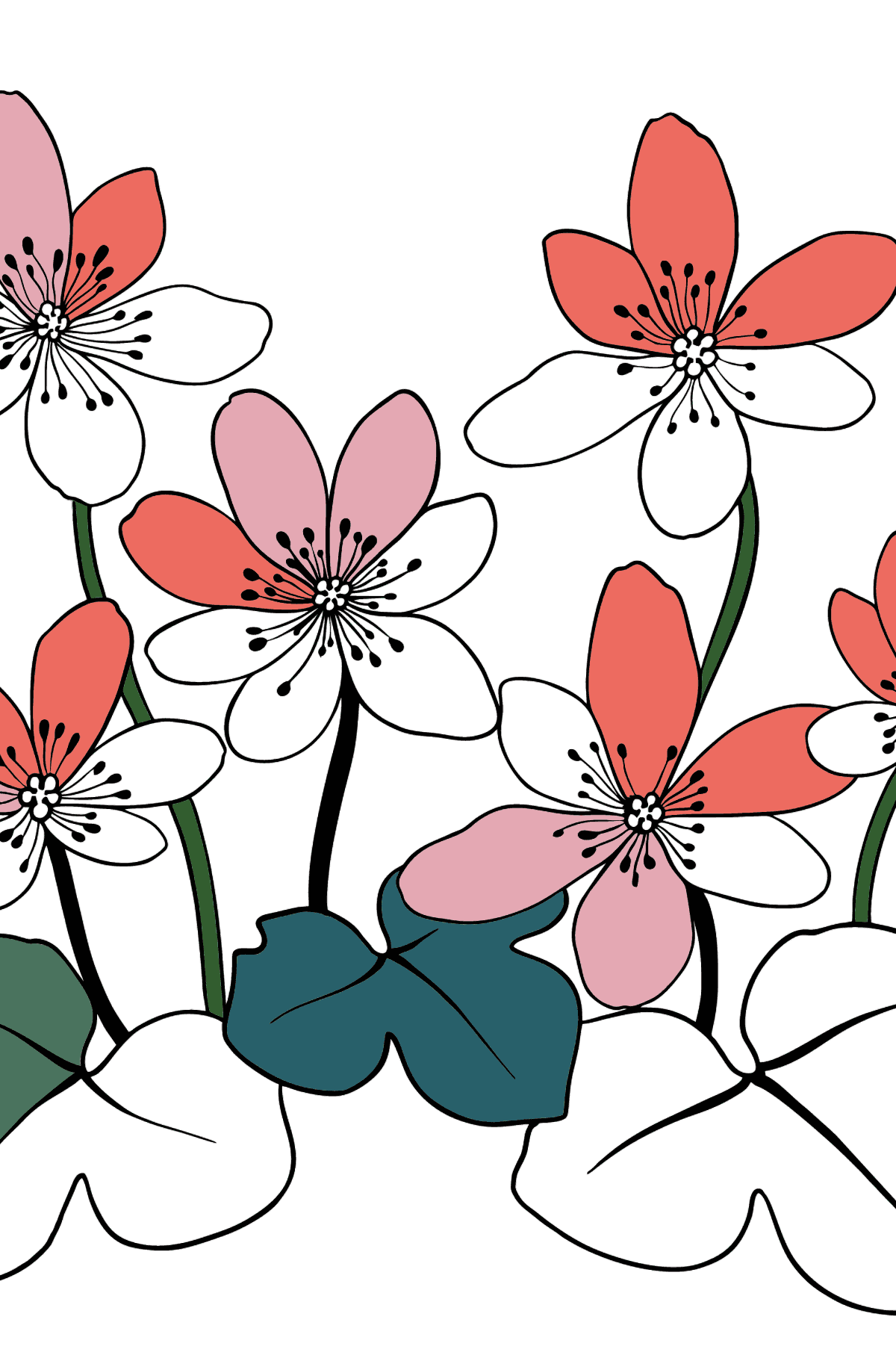 Flower Coloring Page - Hepatica - Coloring Pages for Kids
