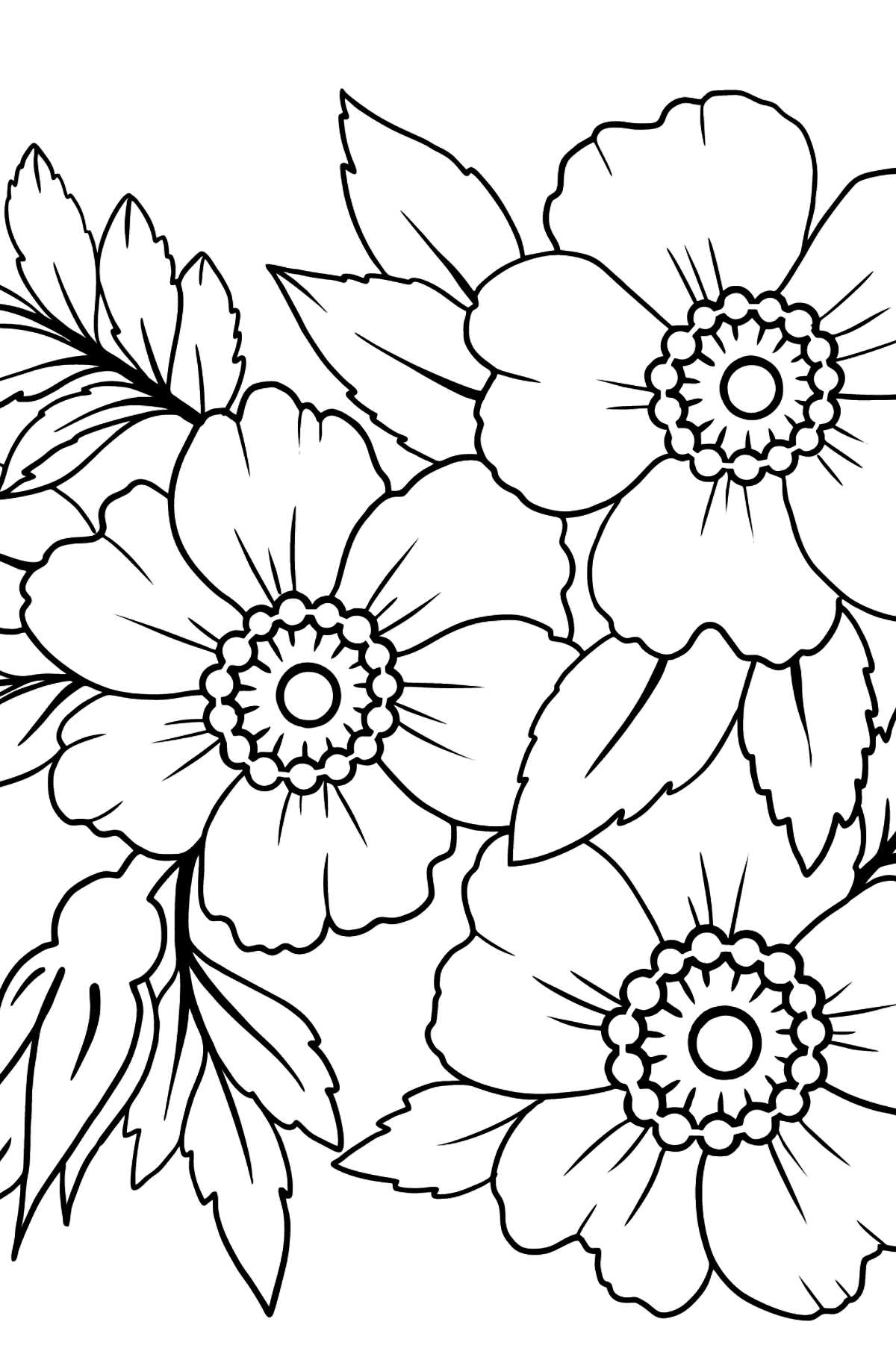 Flower Coloring Page - Japanese Velvet Anemone - Coloring Pages for Kids