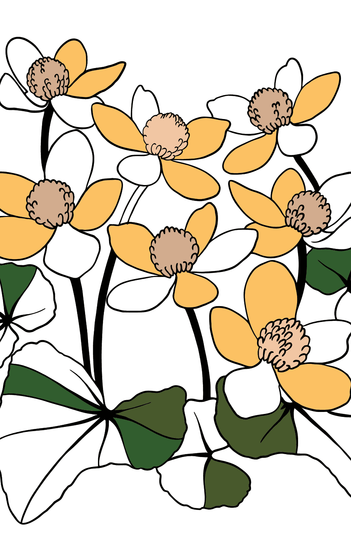 Flower Coloring Page - Marsh Marigold - Coloring Pages for Kids