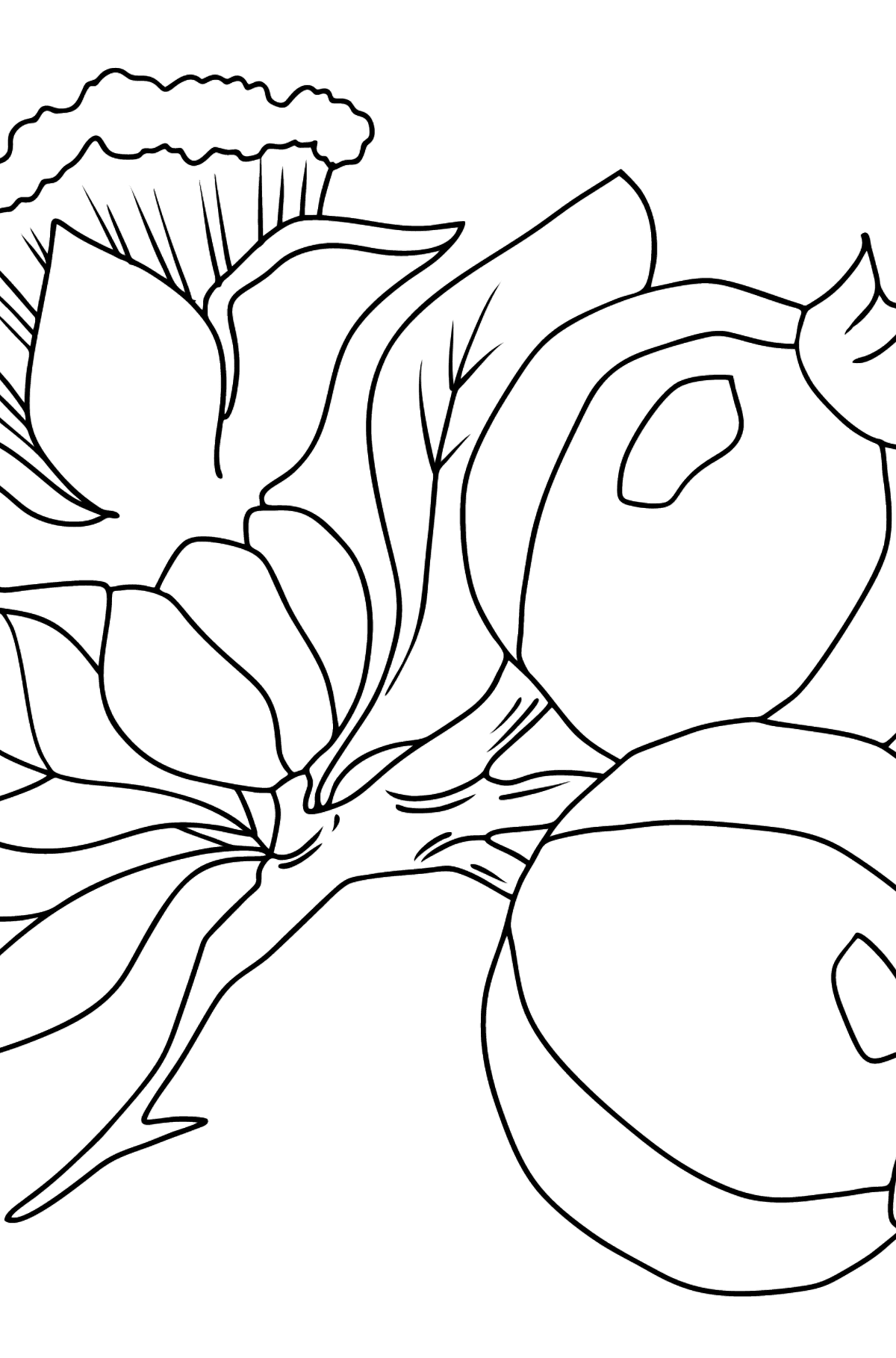 Coloring Page - flowers and fruits - Coloring Pages for Kids