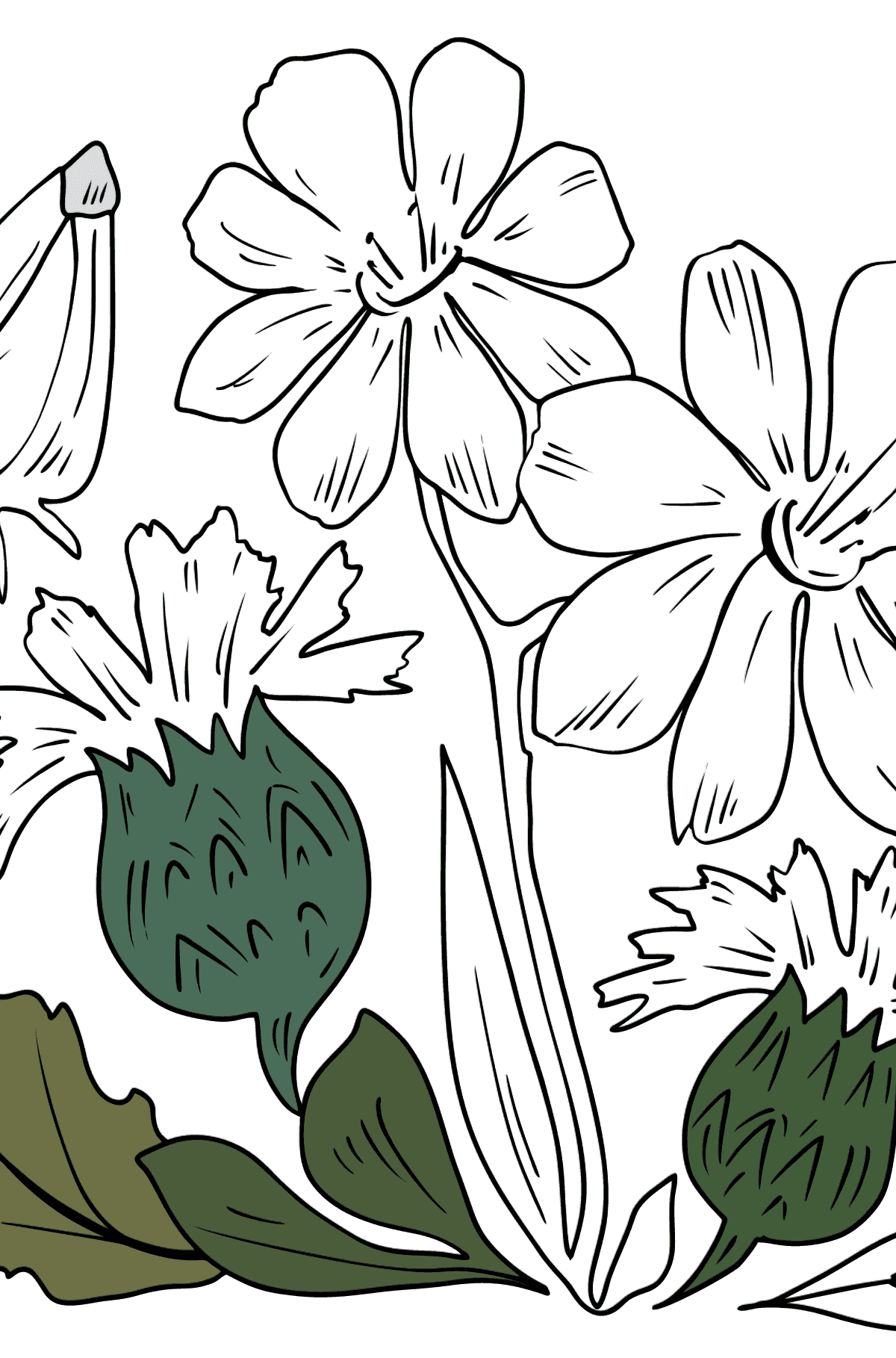 Flower Coloring Page - flowers in the meadow - Coloring Pages for Kids