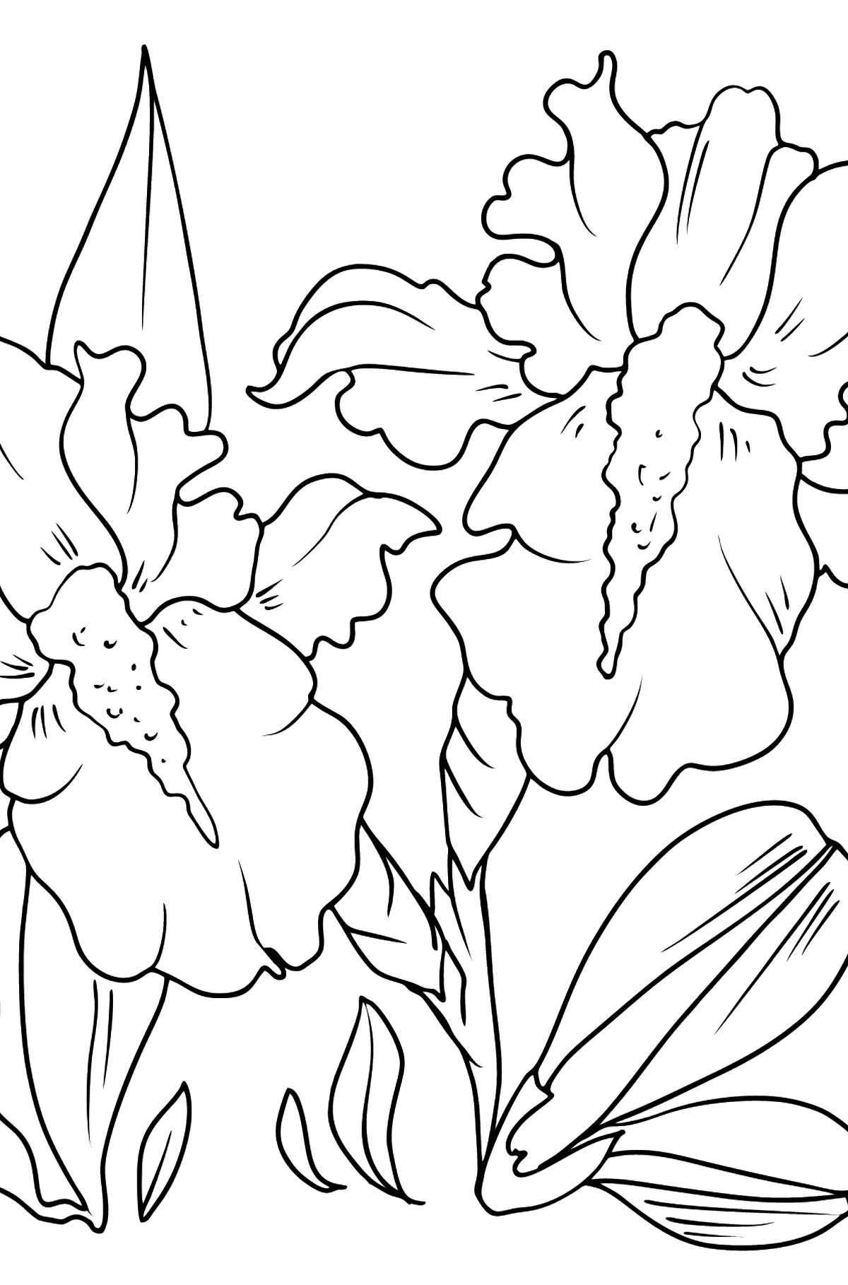 Flower Coloring Page - Irises - Coloring Pages for Kids