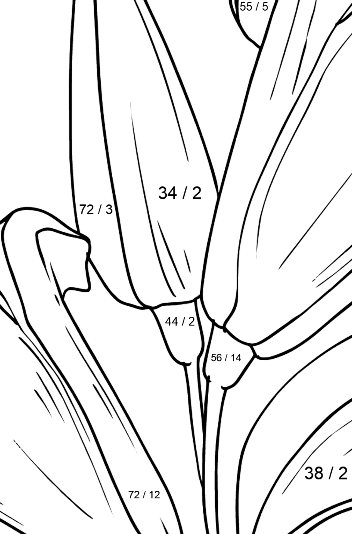 Flower Coloring Page - Lilies - Math Coloring - Division for Kids