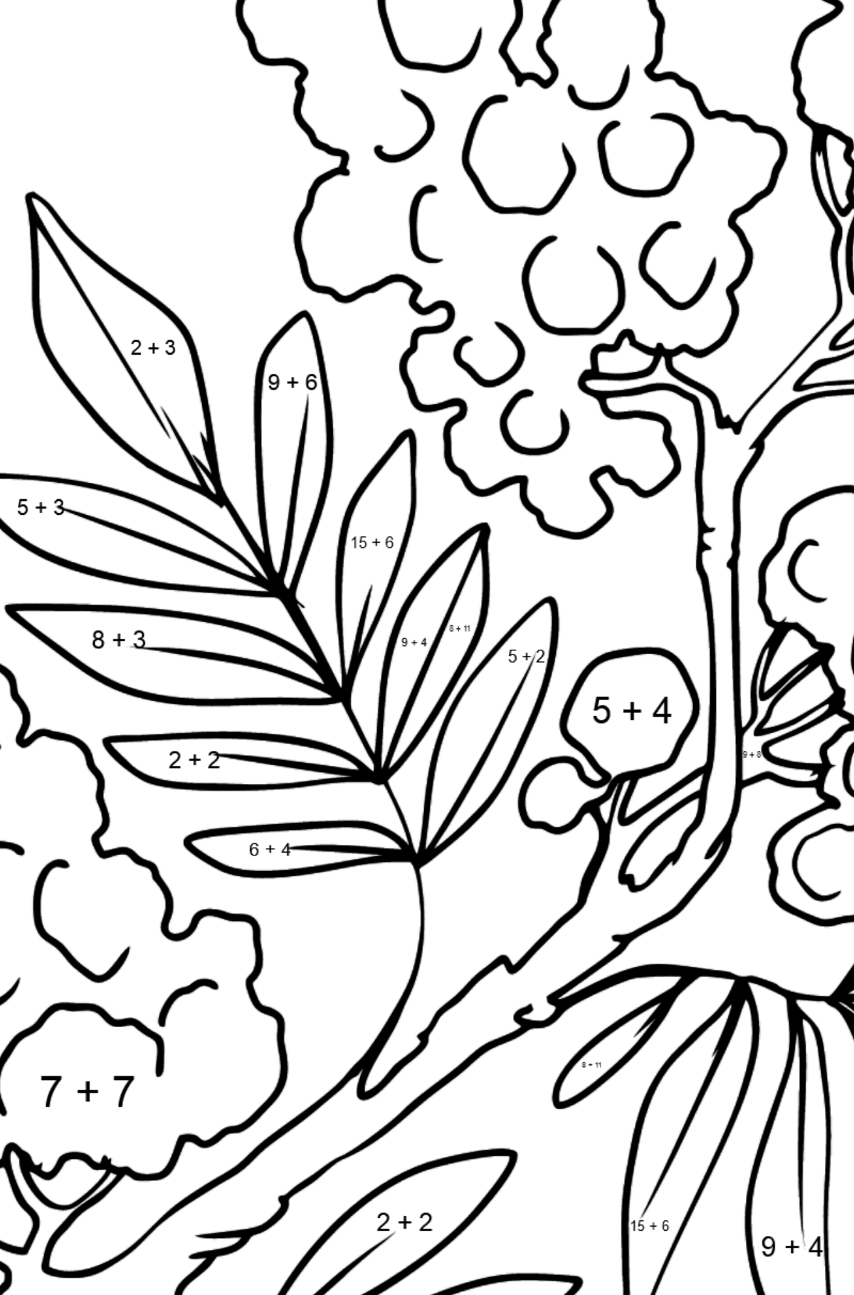 Flower Coloring Page - Mimosa - Math Coloring - Addition for Kids