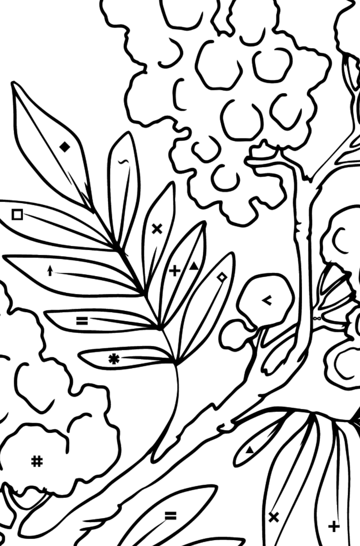 Flower Coloring Page - Mimosa - Coloring by Symbols for Kids